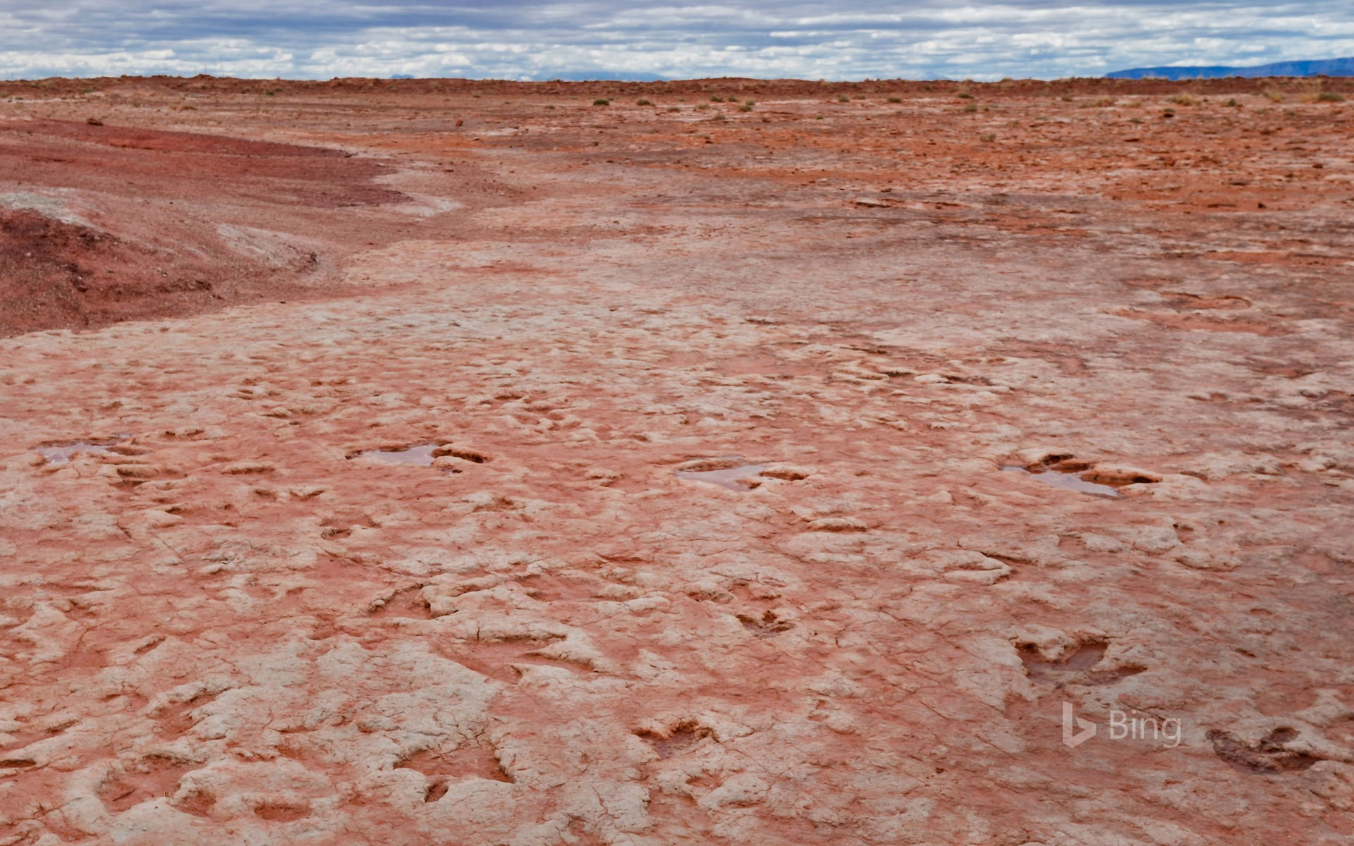 Dinosaur tracks from the Jurassic period found near Tuba City, Arizona, in the Navajo Nation