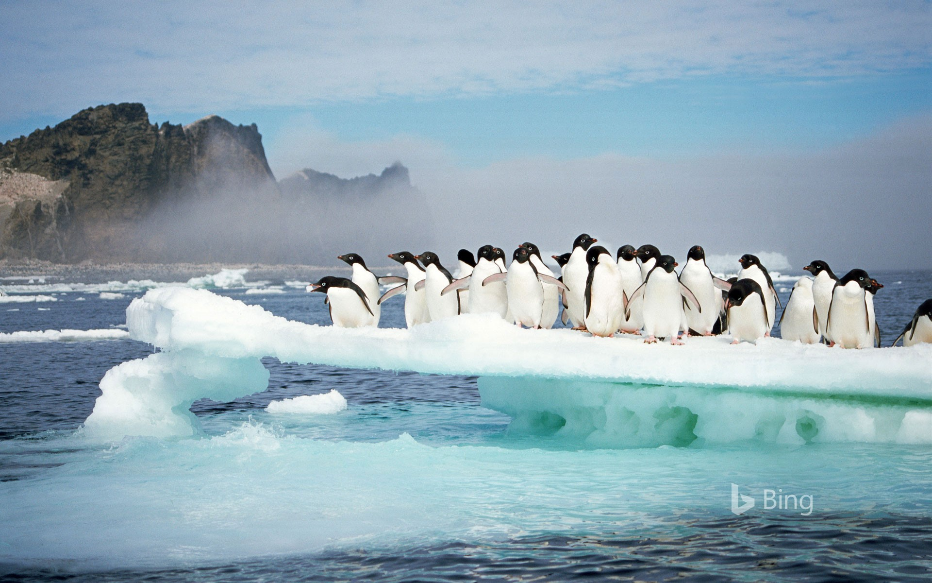 Adélie penguins at Possession Island, Antarctica