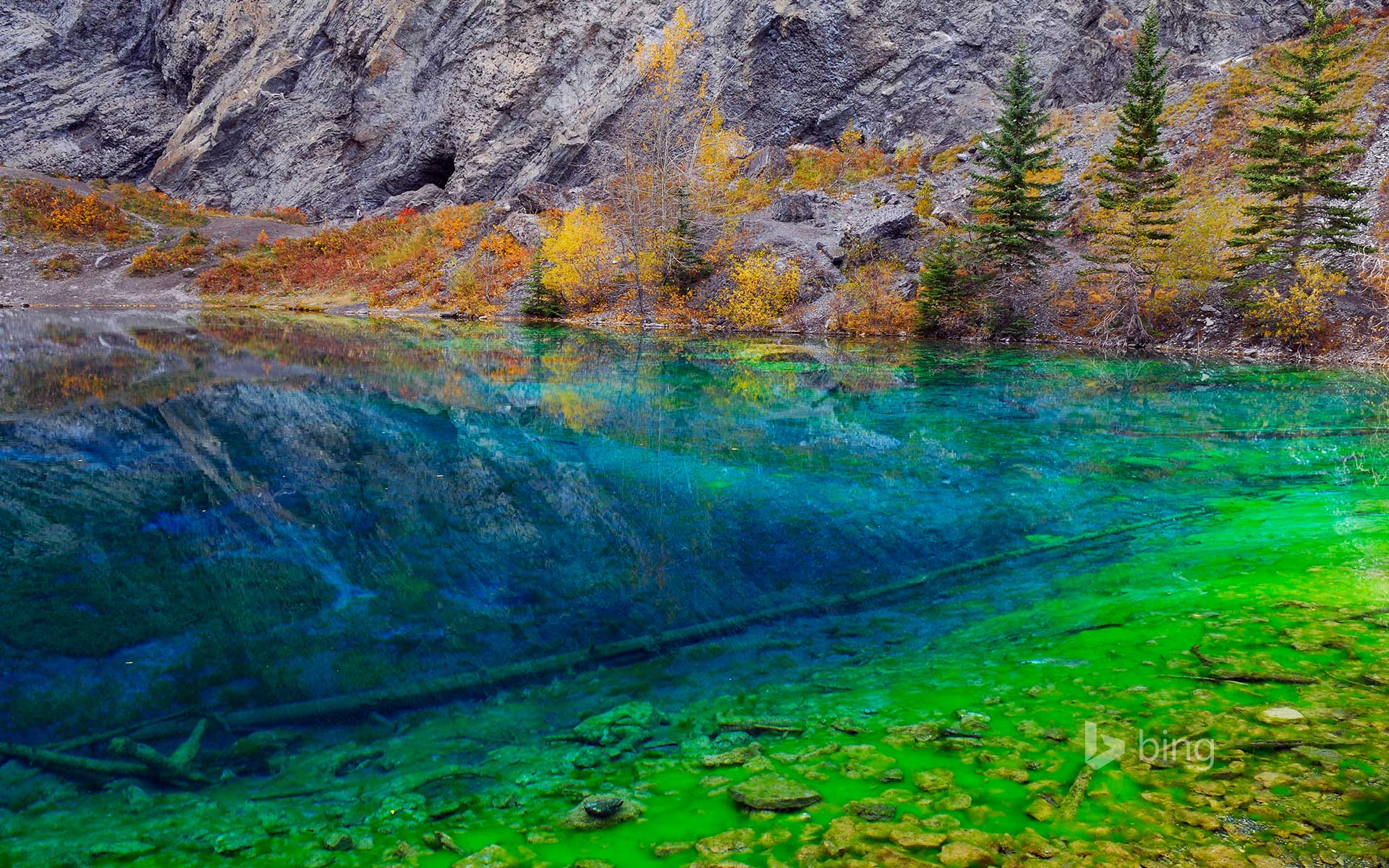 Blue and Green algae in the clear water of Grassi Lakes, near Canmore, Alberta, Canada