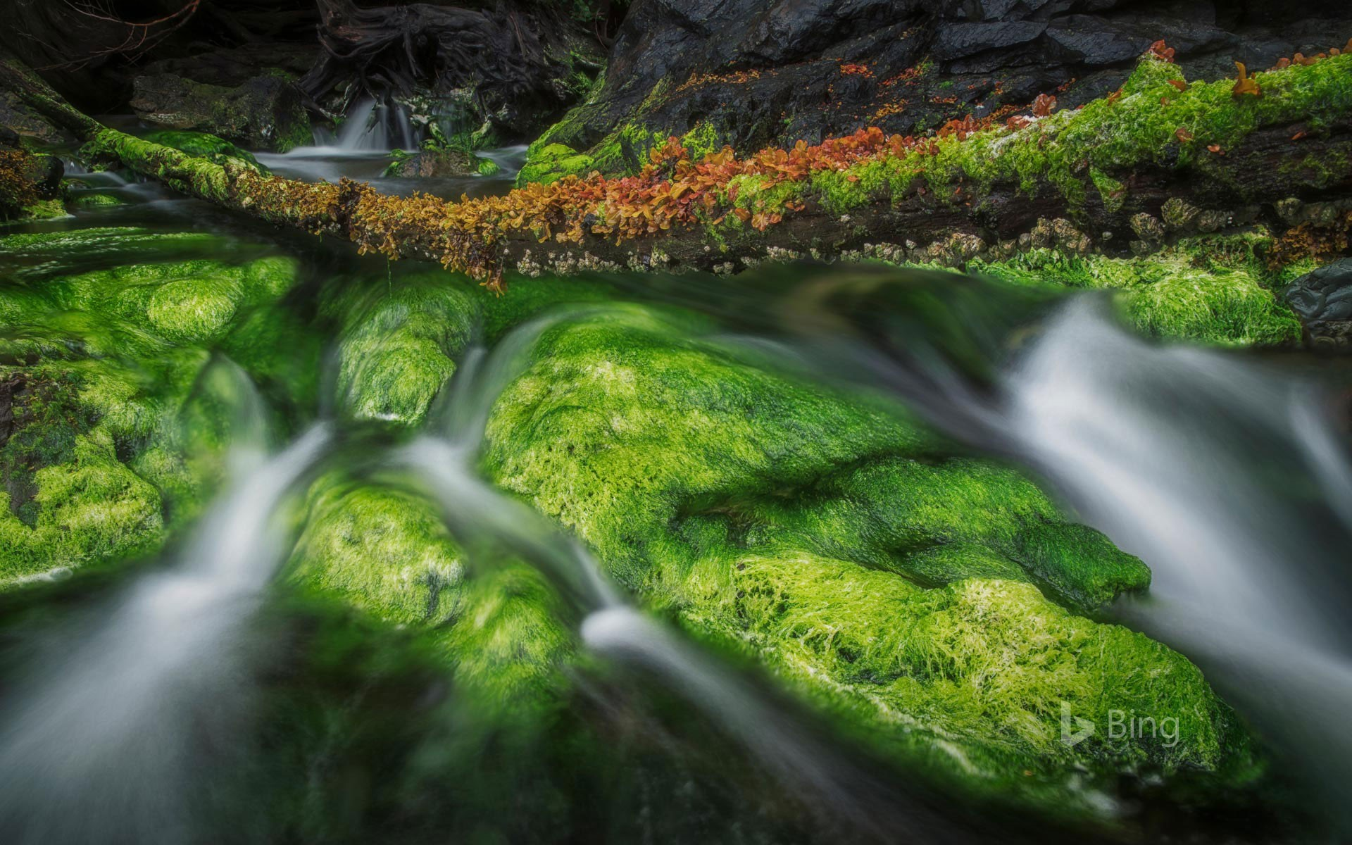 A forest stream in Gwaii Haanas National Park Reserve and Haida Heritage Site, Haida Gwaii, British Columbia, Canada