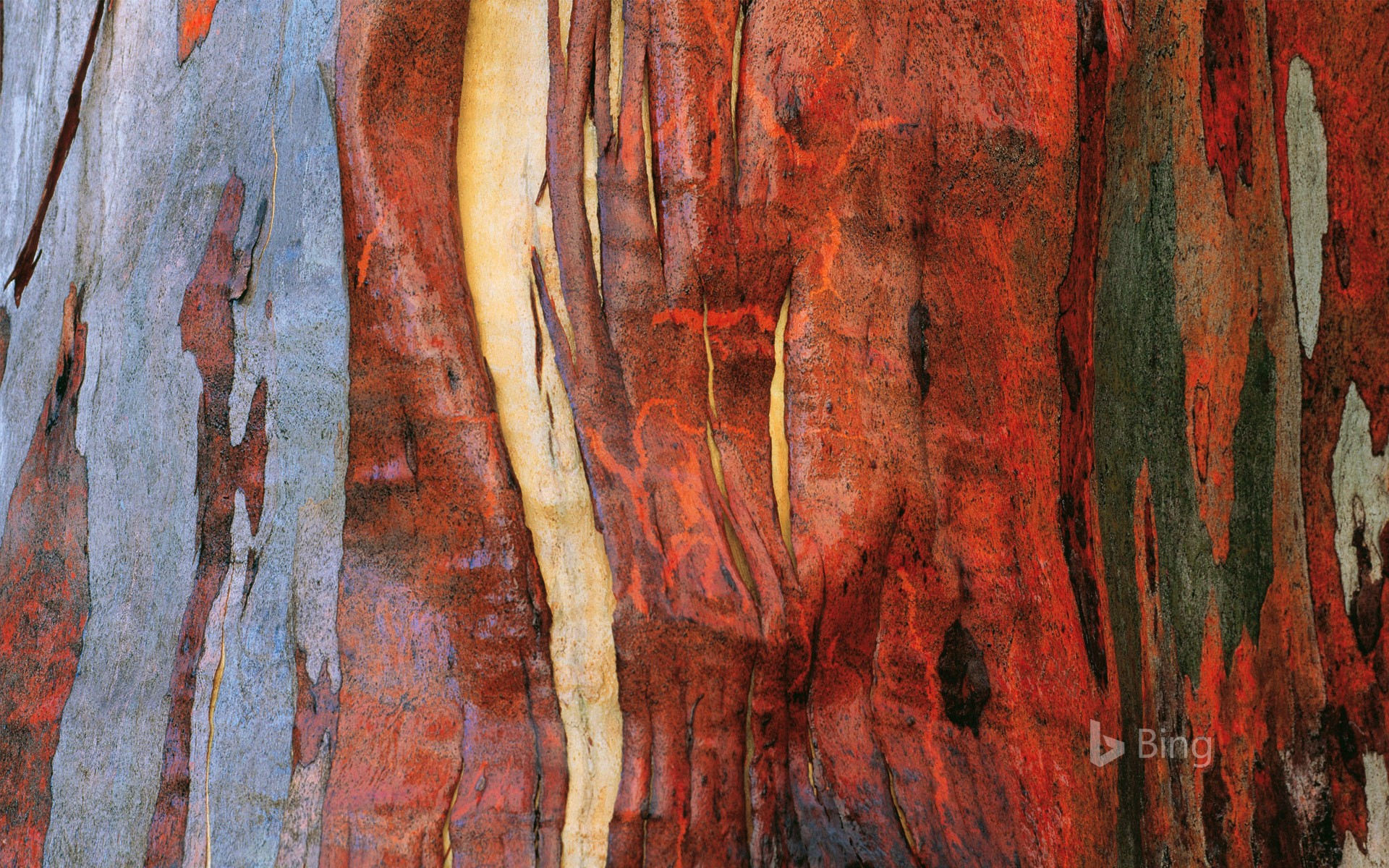 Alpine eucalypt bark in Tasmania, Australia (© Australian Scenics/Getty Images)