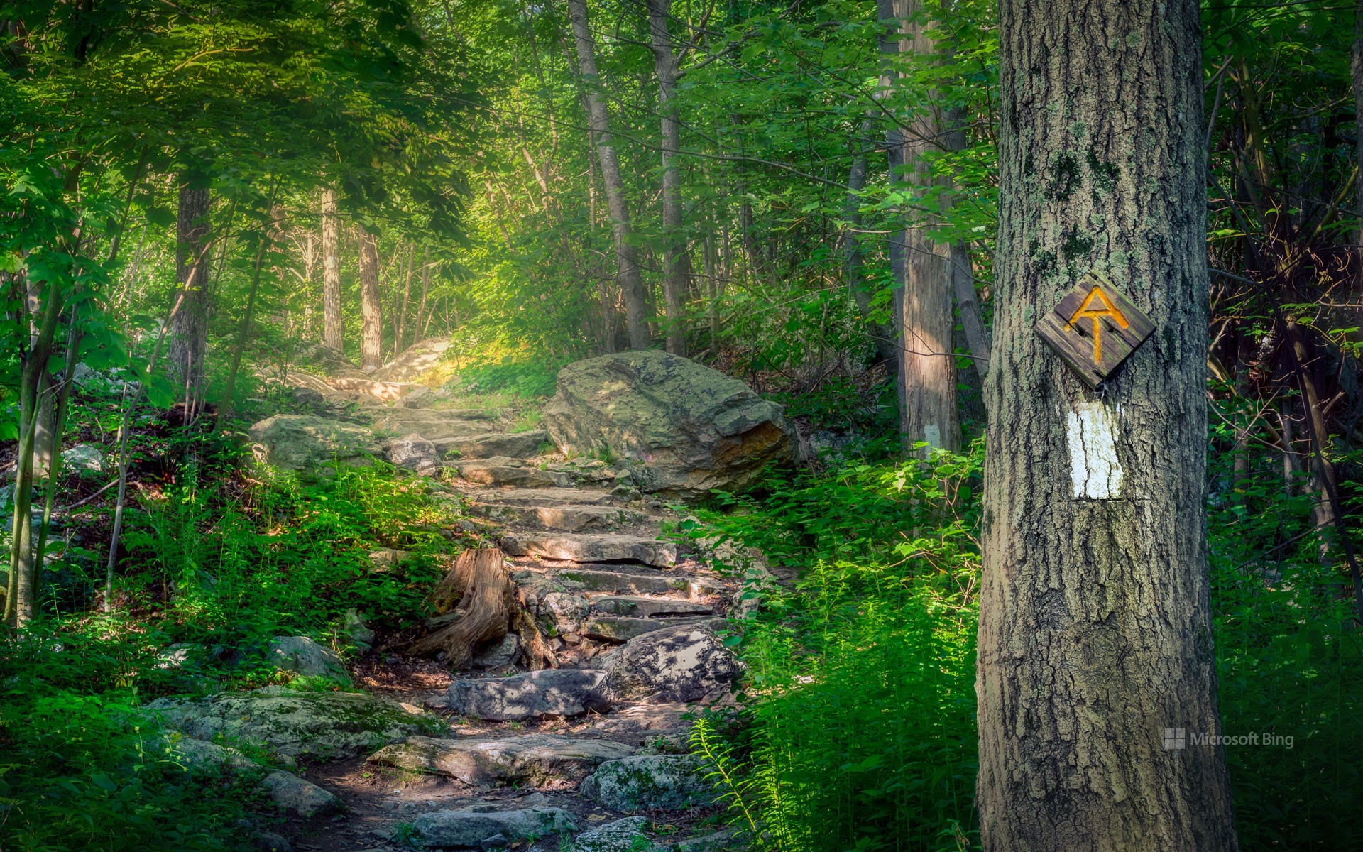 Appalachian Trail, Stokes State Forest, New Jersey, USA