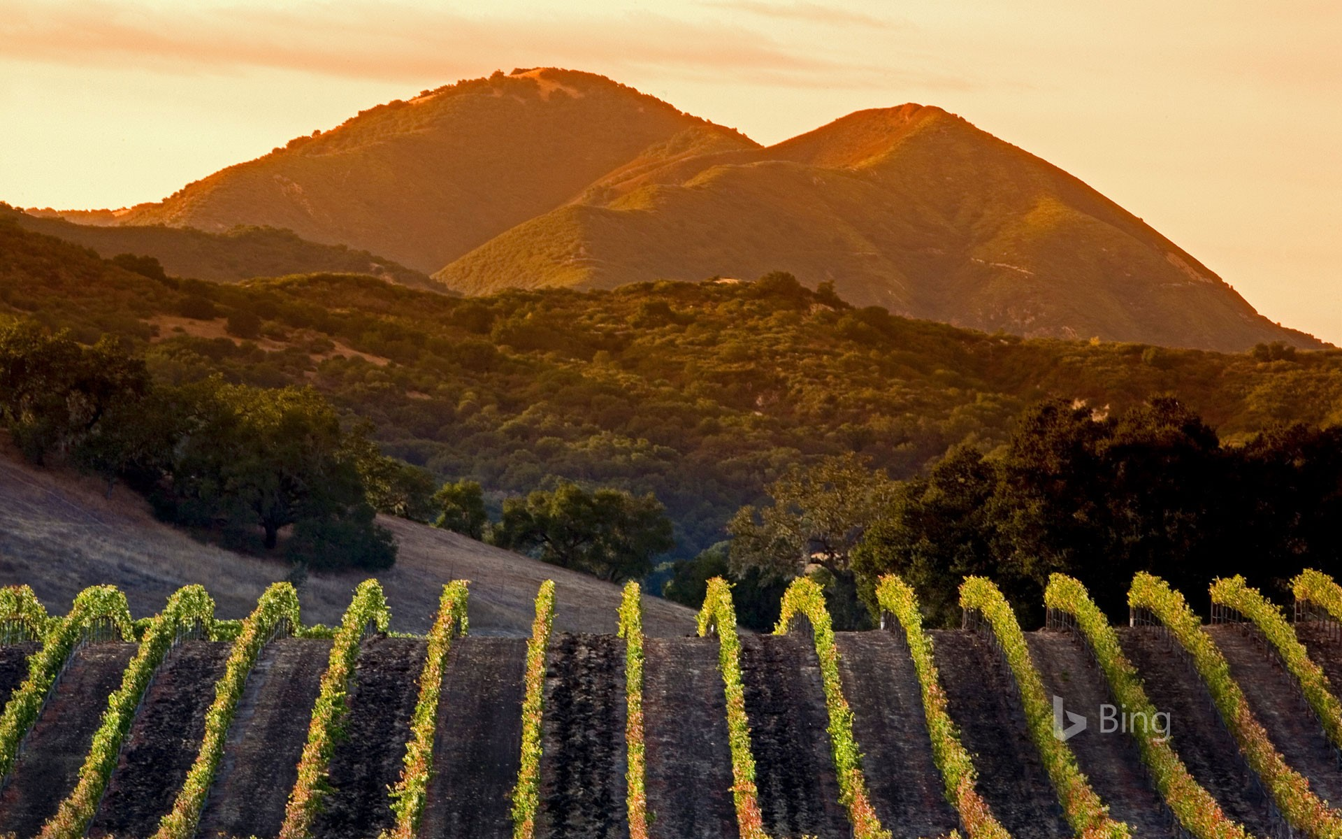 Central Coast vineyards in Arroyo Grande, California (© Ian Shive/Tandem Motion + Stills)