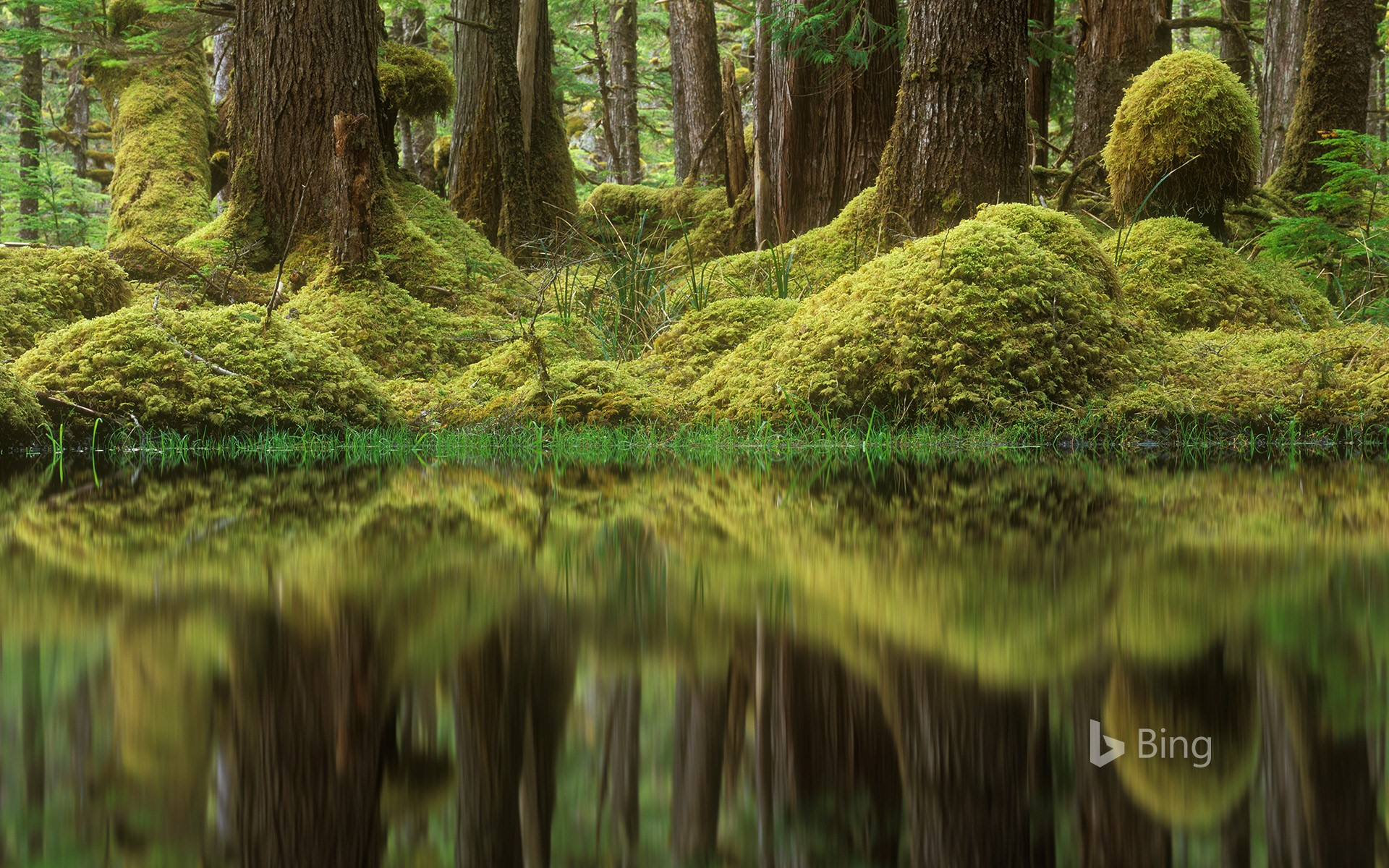 Swamp forest, Tow Hill Ecological Reserve, B.C., Canada