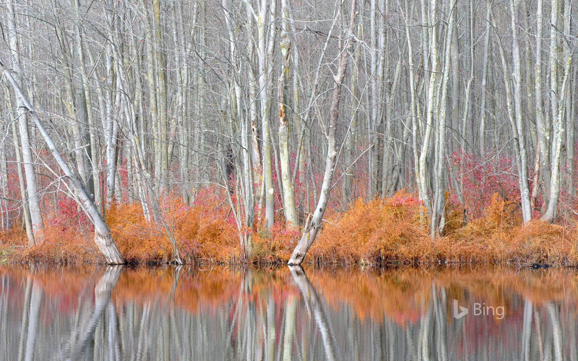 Bare trees and autumn ferns in Beaver Lake Nature Center, New York