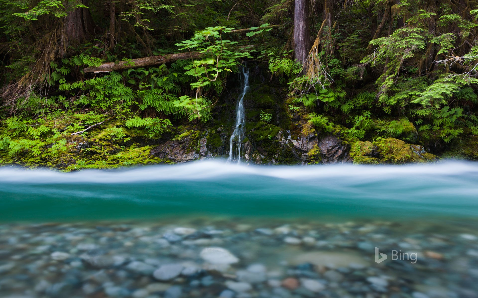 Bacon Creek, Mount Baker-Snoqualmie National Forest, Washington