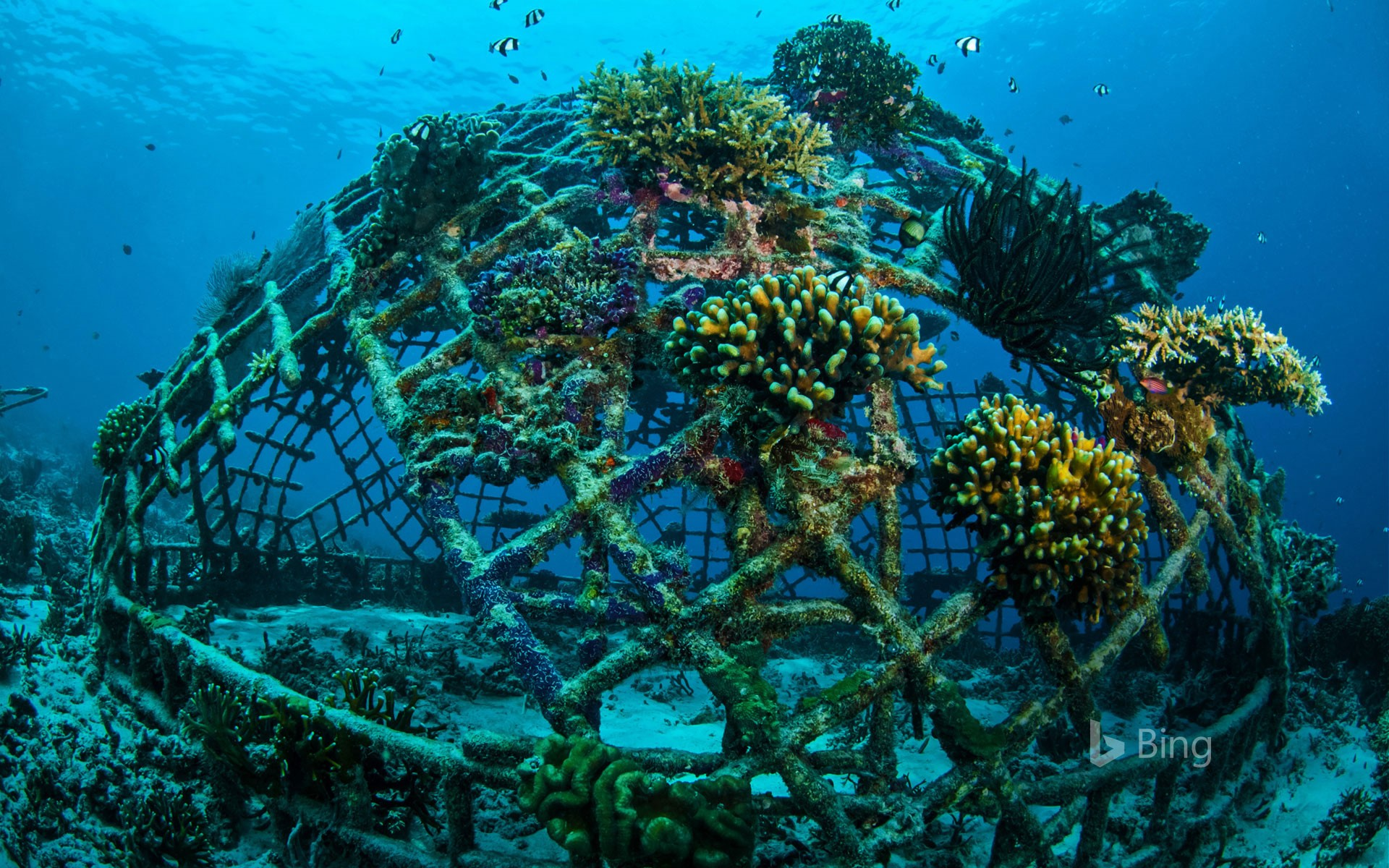 Biorock artificial reef off the Gili Islands, Indonesia (© fenkieandreas/Getty Images Plus)