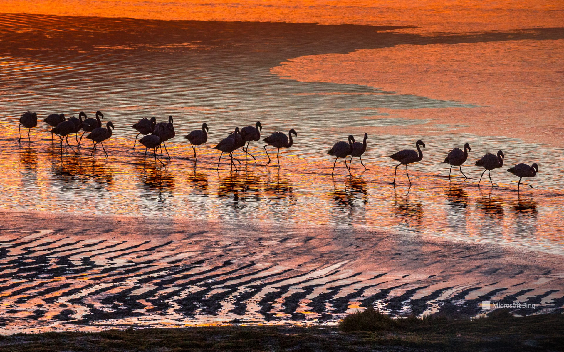 Flamingos in the Eduardo Avaroa Andean Fauna National Reserve in Bolivia