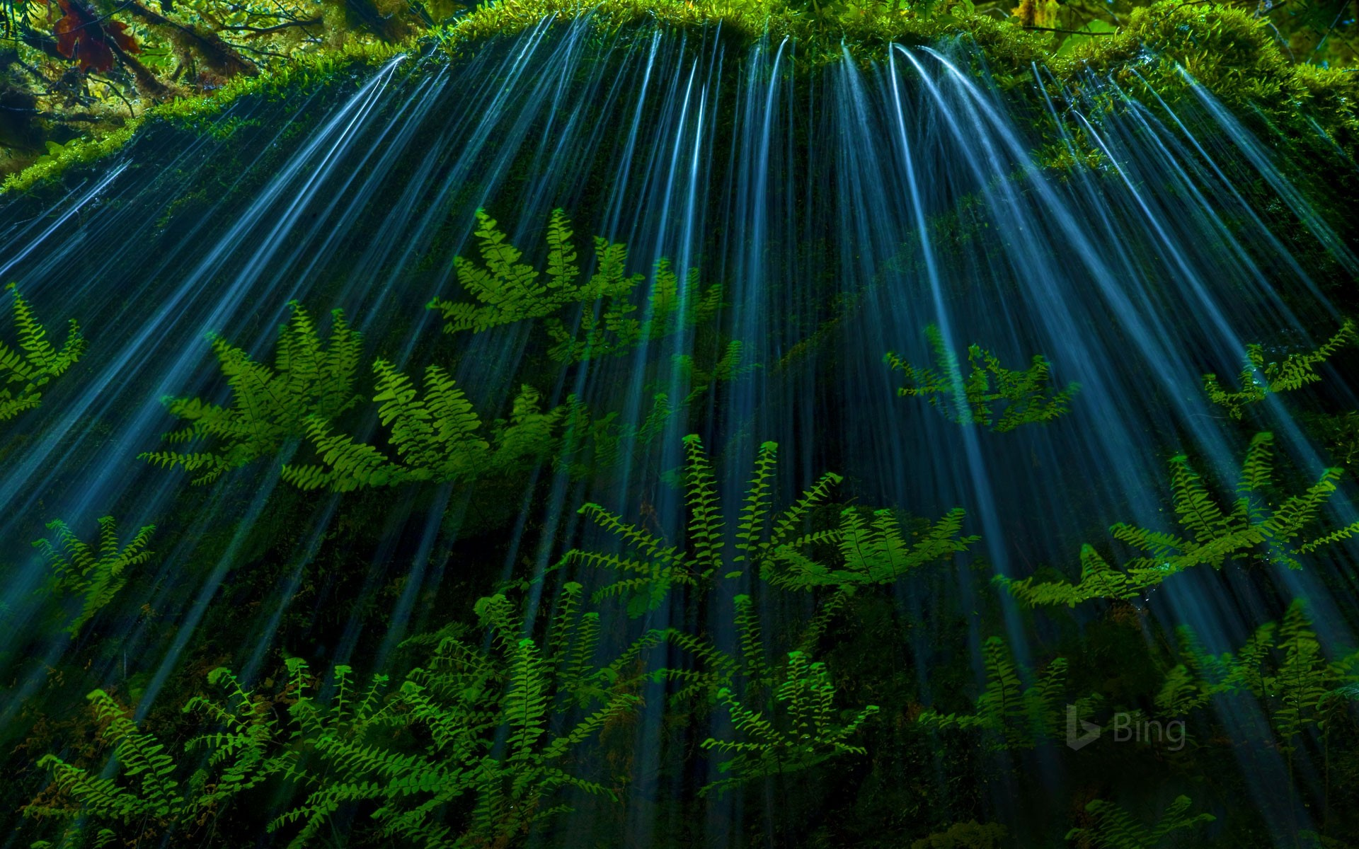 Ferns in the Oregon side of the Columbia River Gorge (© Marc Adamus/Getty Images)