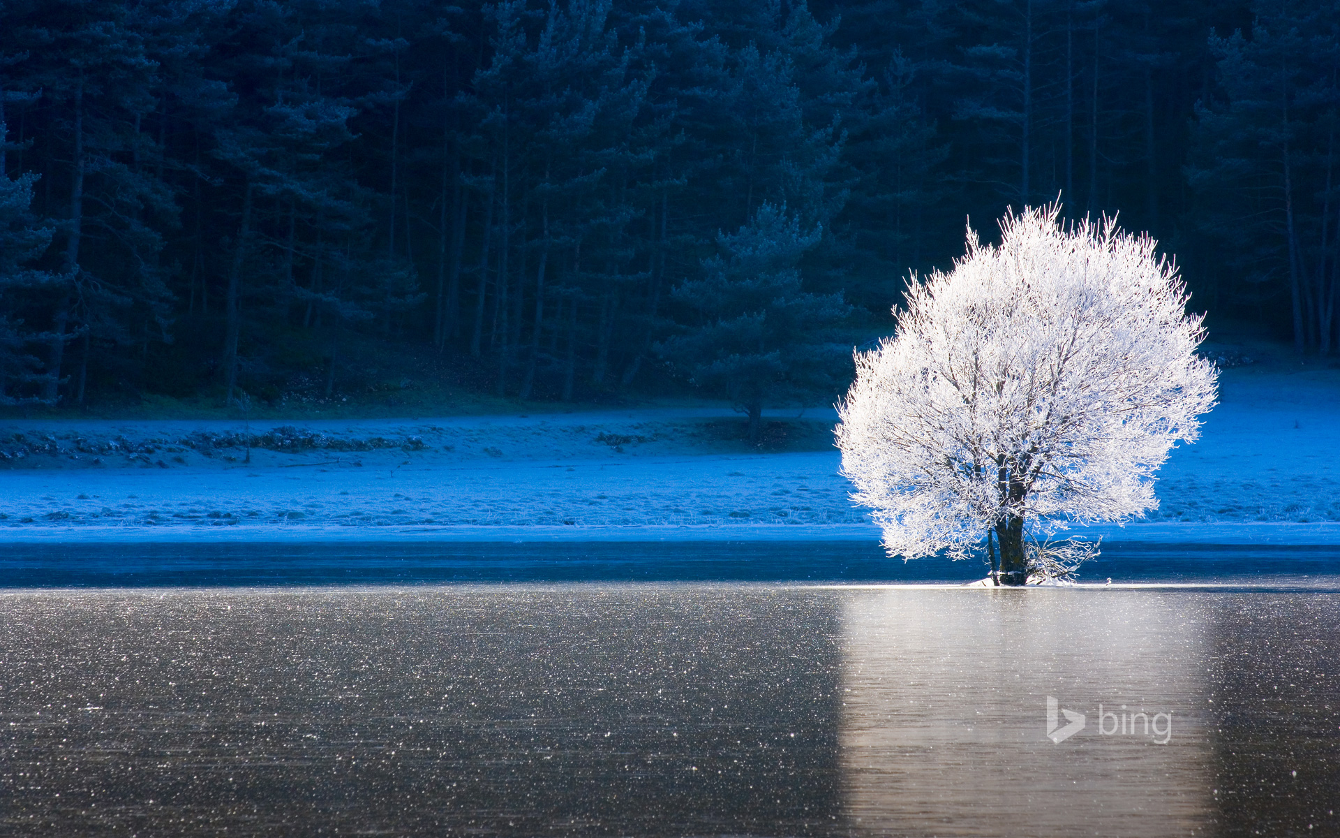 Frozen lake and frost-covered tree in Caille, Alpes-Maritimes, Provence-Alpes-Côte d'Azur, France