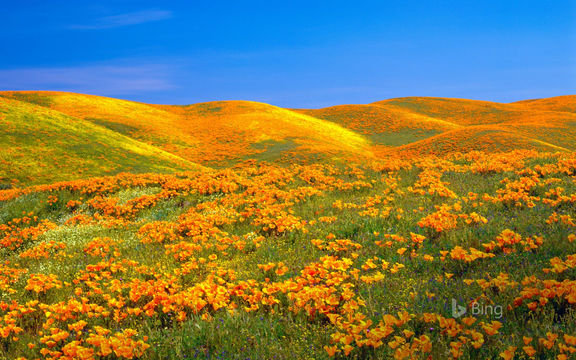 Antelope Valley Poppy Reserve near Lancaster, California (© Ron Thomas/Getty Images)