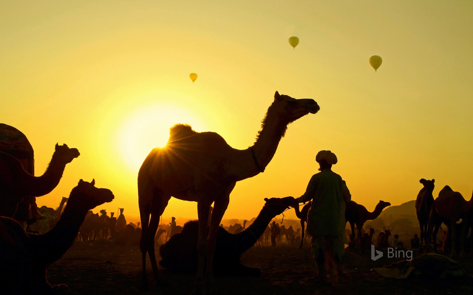 Camels gather with their herders at the Pushkar Camel Fair, Rajasthan state, India