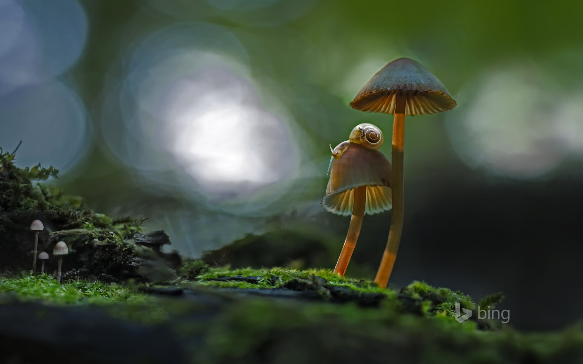 Two snails atop a mushroom