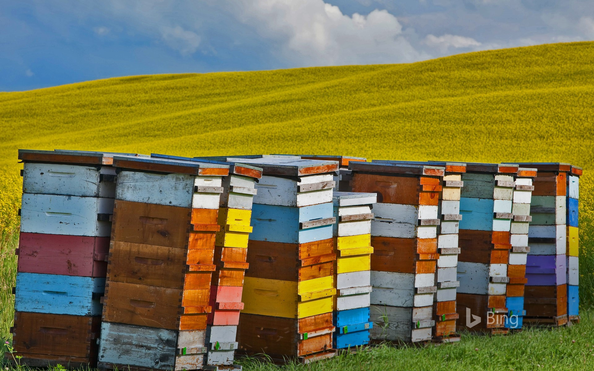 Beehive boxes in the Pembina Valley Region, Manitoba, Canada