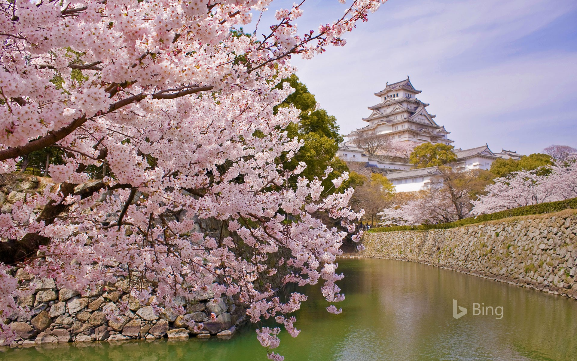 Cherry blossoms and Himeji Castle in Himeji, Japan