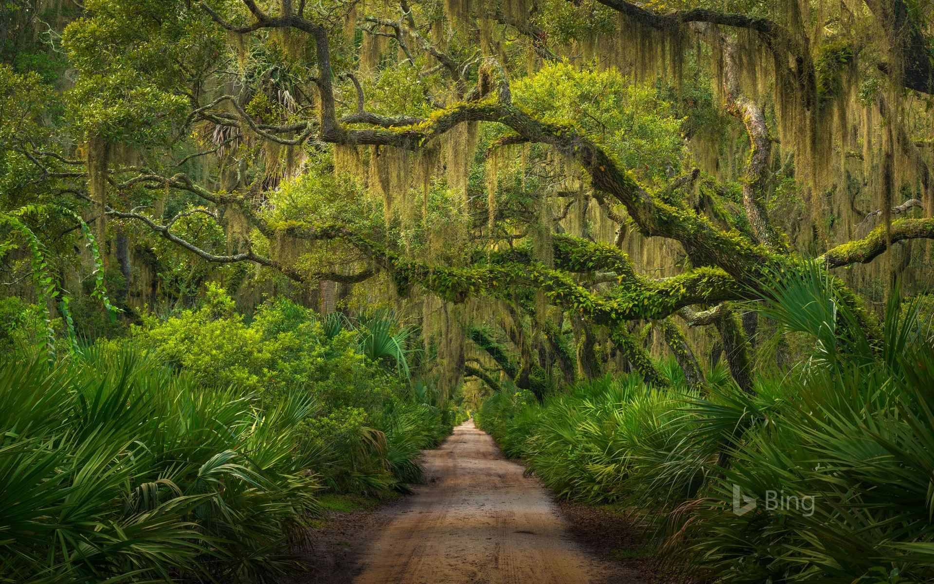 Maritime forest on Cumberland Island, Georgia