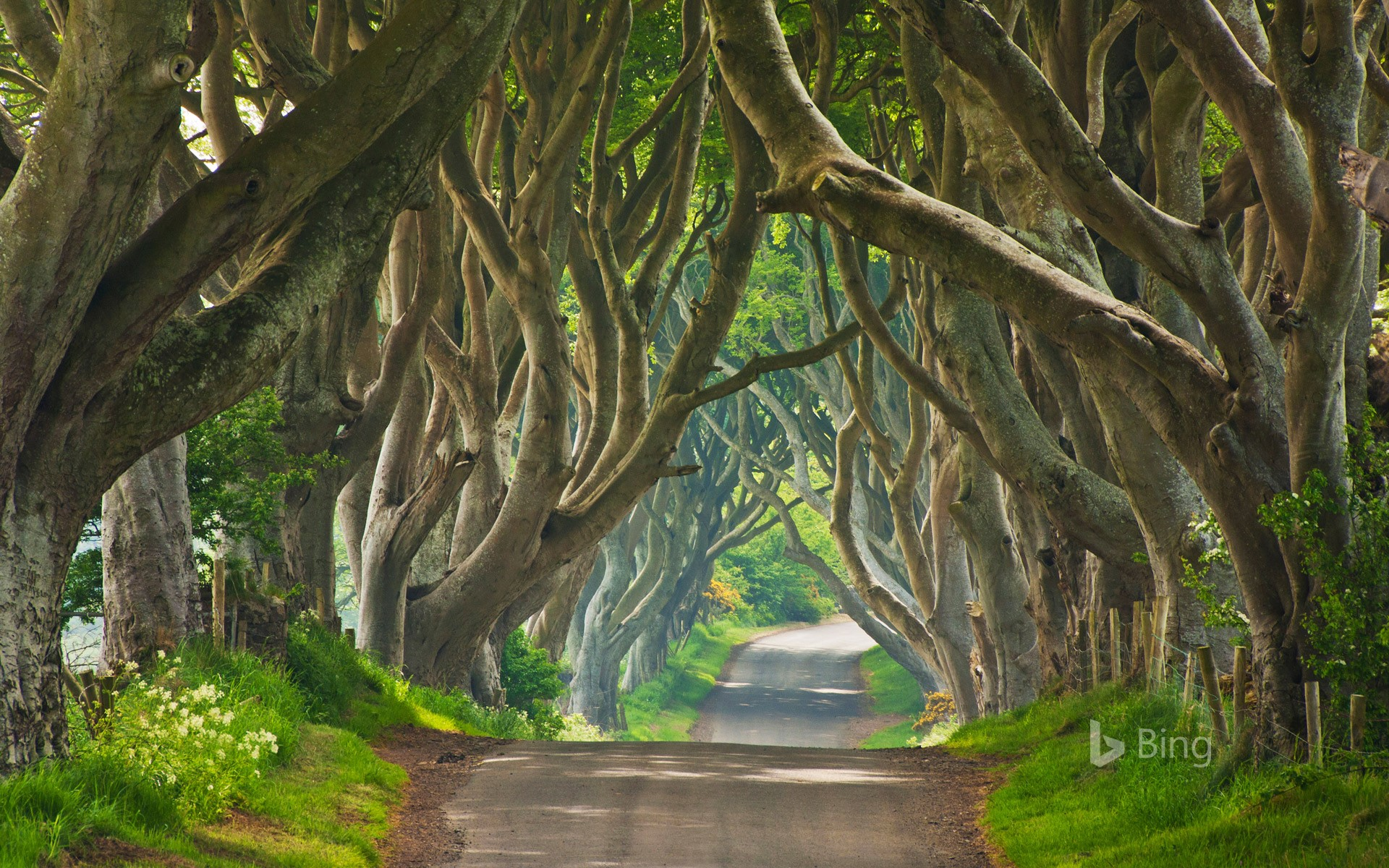 An avenue of beech trees known as 'Dark Hedges' in Ballymoney, Northern Ireland