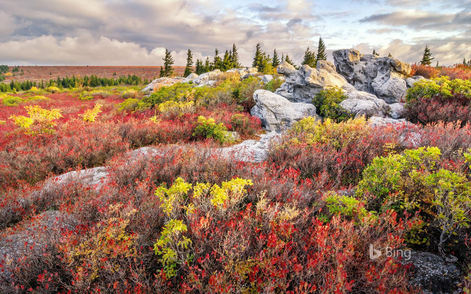 Bear Rocks Preserve in the Dolly Sods Wilderness, West Virginia, USA