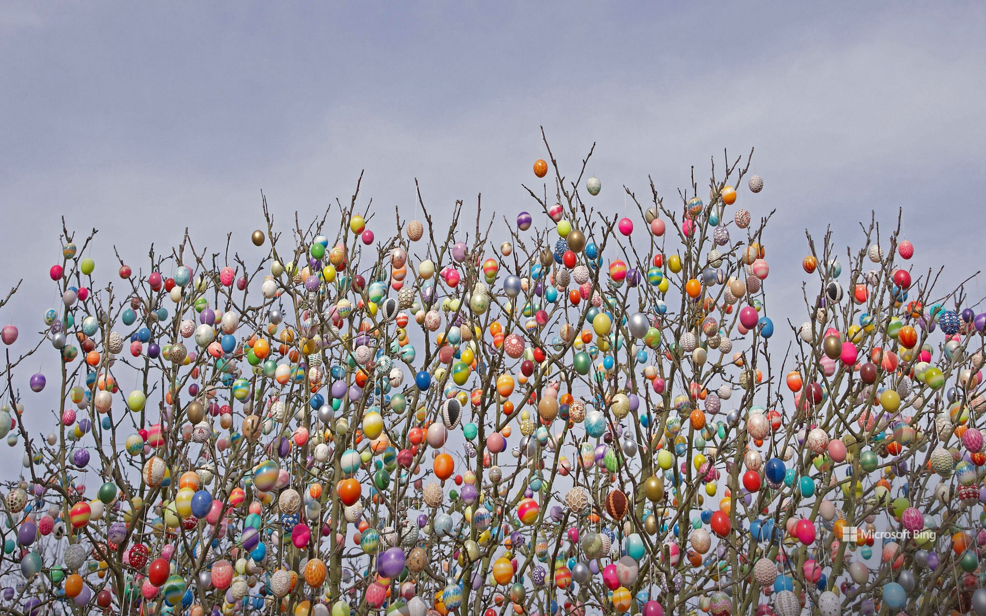 Ostereierbaum (Easter egg tree) in Saalfeld, Germany