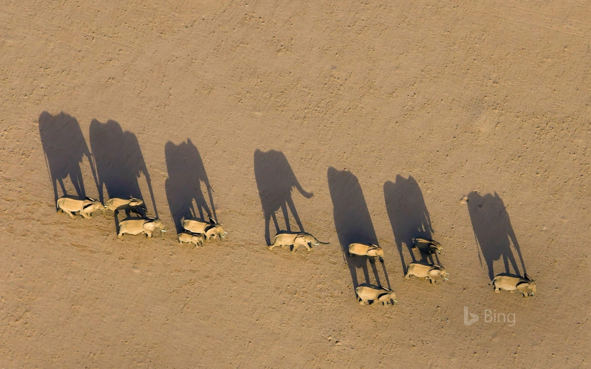 Elephant herd in Damaraland District, Namibia (© Michael Poliza/Getty Images)