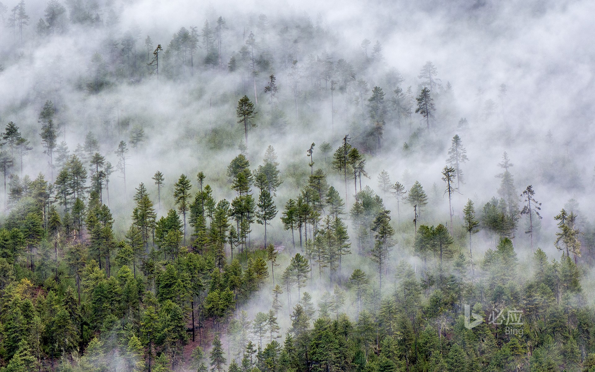 [Frost Today] Cloud Forest in Nyingchi, Tibet Plateau