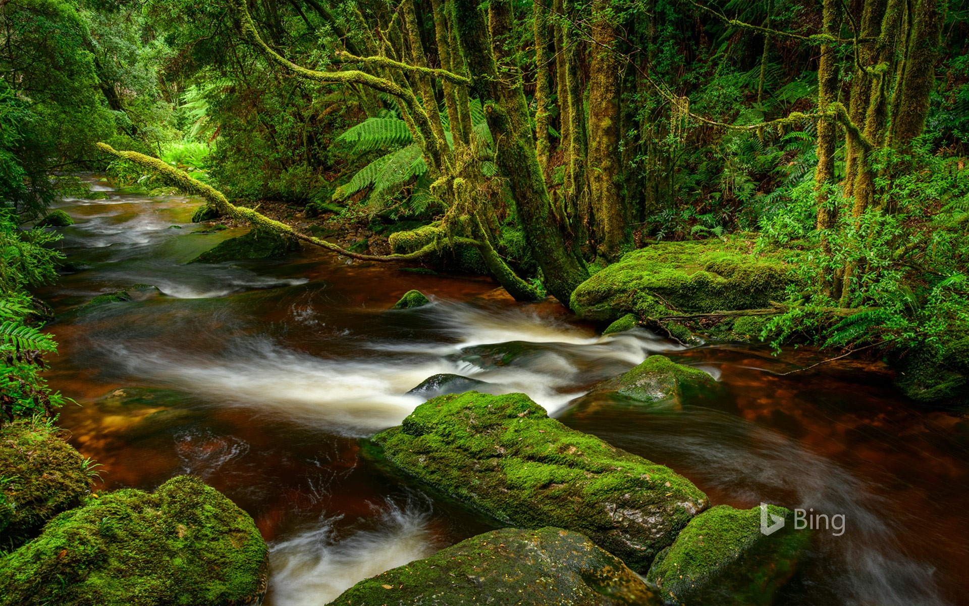 Franklin-Gordon Wild Rivers National Park, Tasmania
