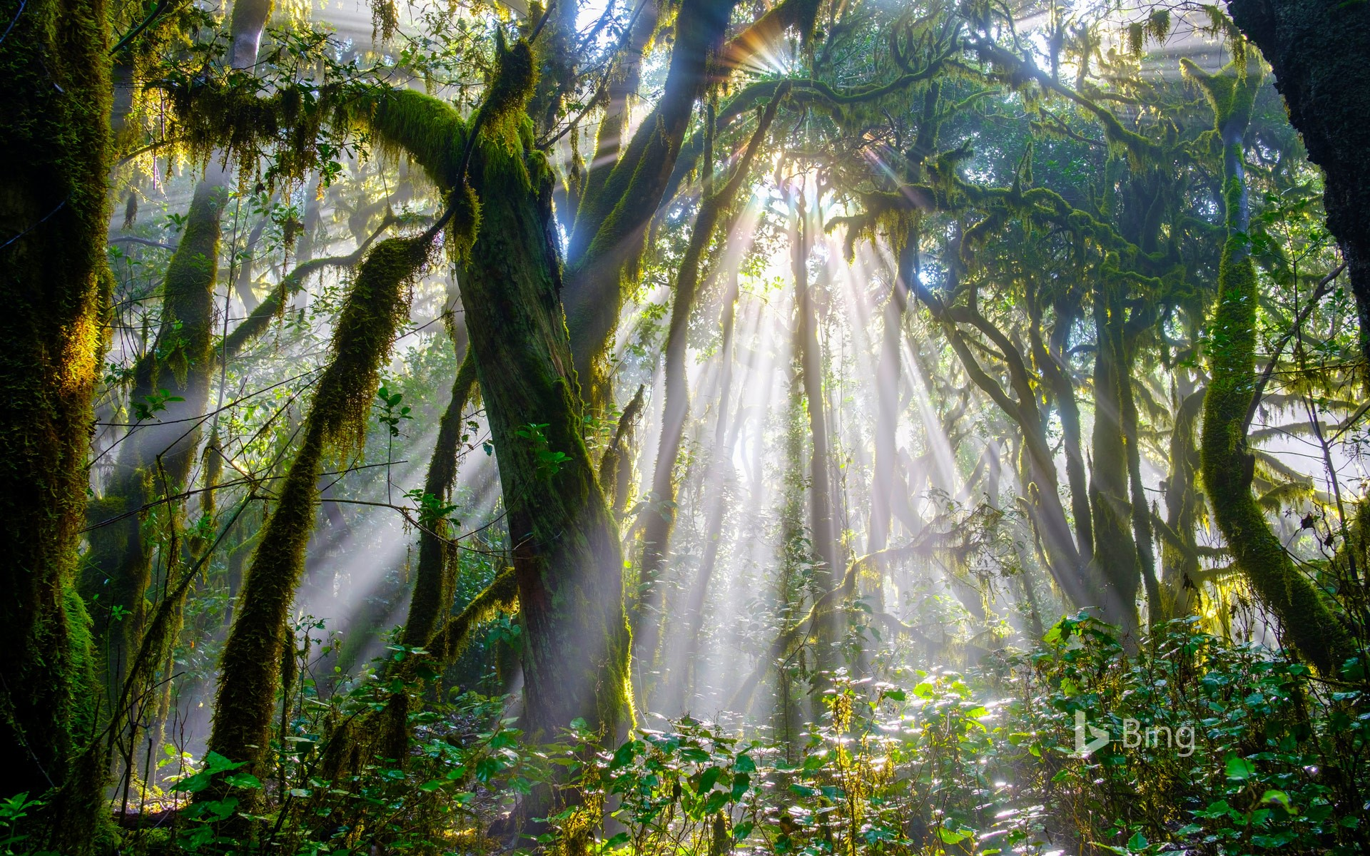 Forest in Garajonay National Park, La Gomera, Spain