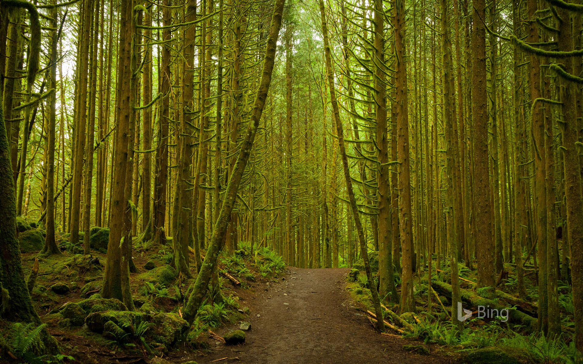 A pathway through the dense woodland forest at Golden Ears Provincial Park, B.C.