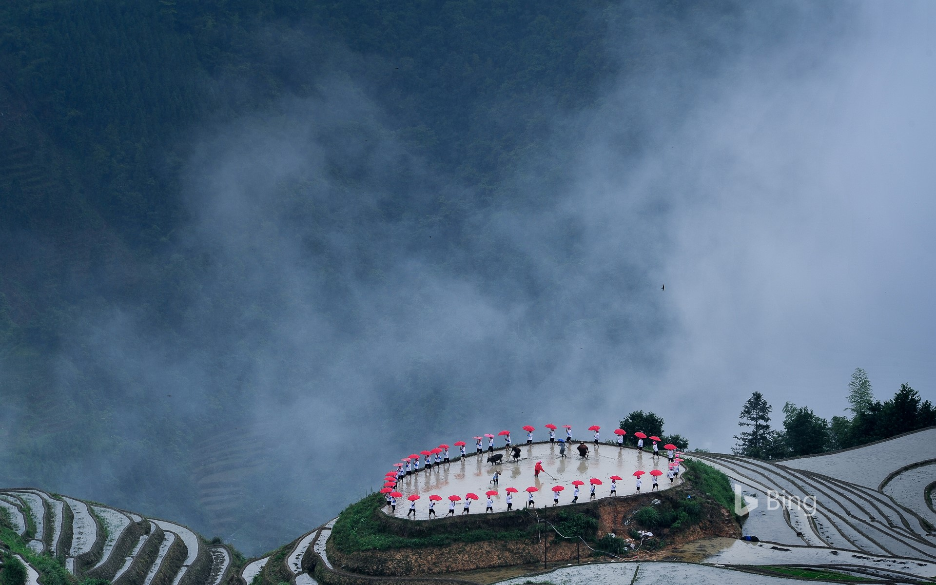 [Guyu Today] Busy Scenery of Longsheng Terraced Fields during the Ping'an Village Planting Festival