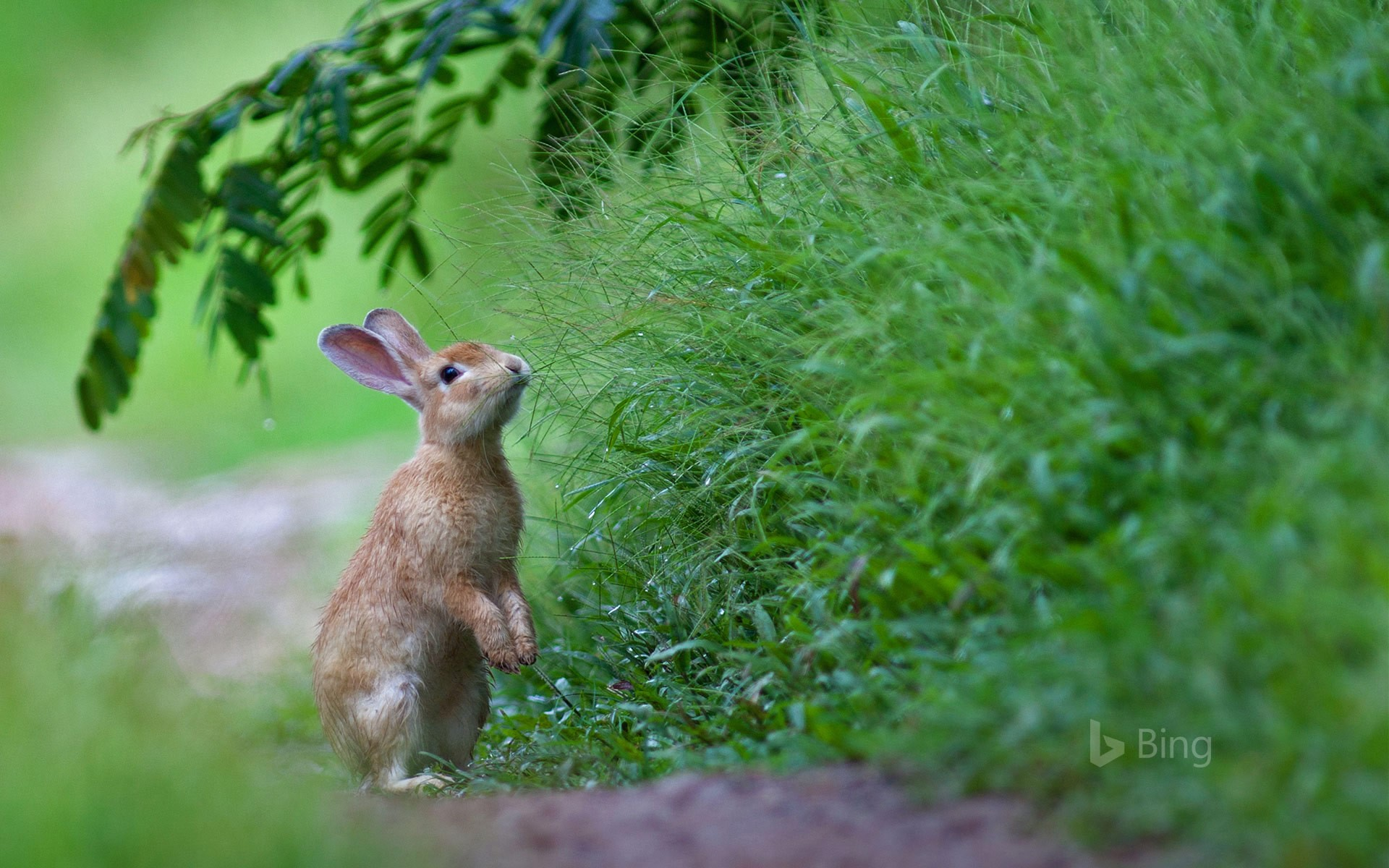 A rabbit in the grass for Easter