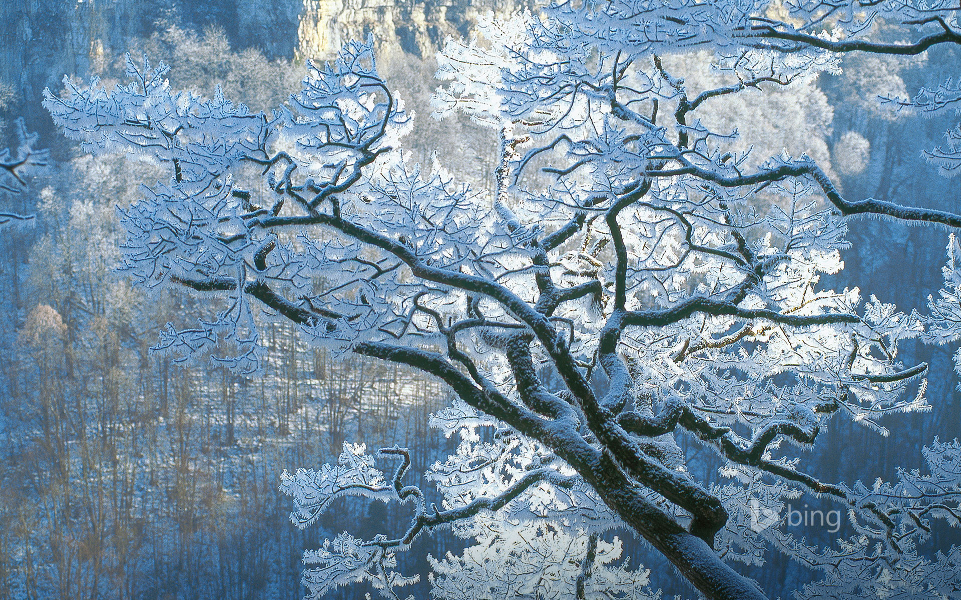 Oak branches covered in ice, Jura, France