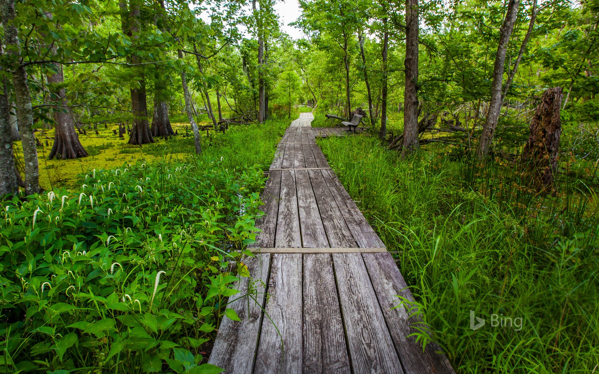 Barataria Trail, part of Jean Lafitte National Historical Park, Louisiana
