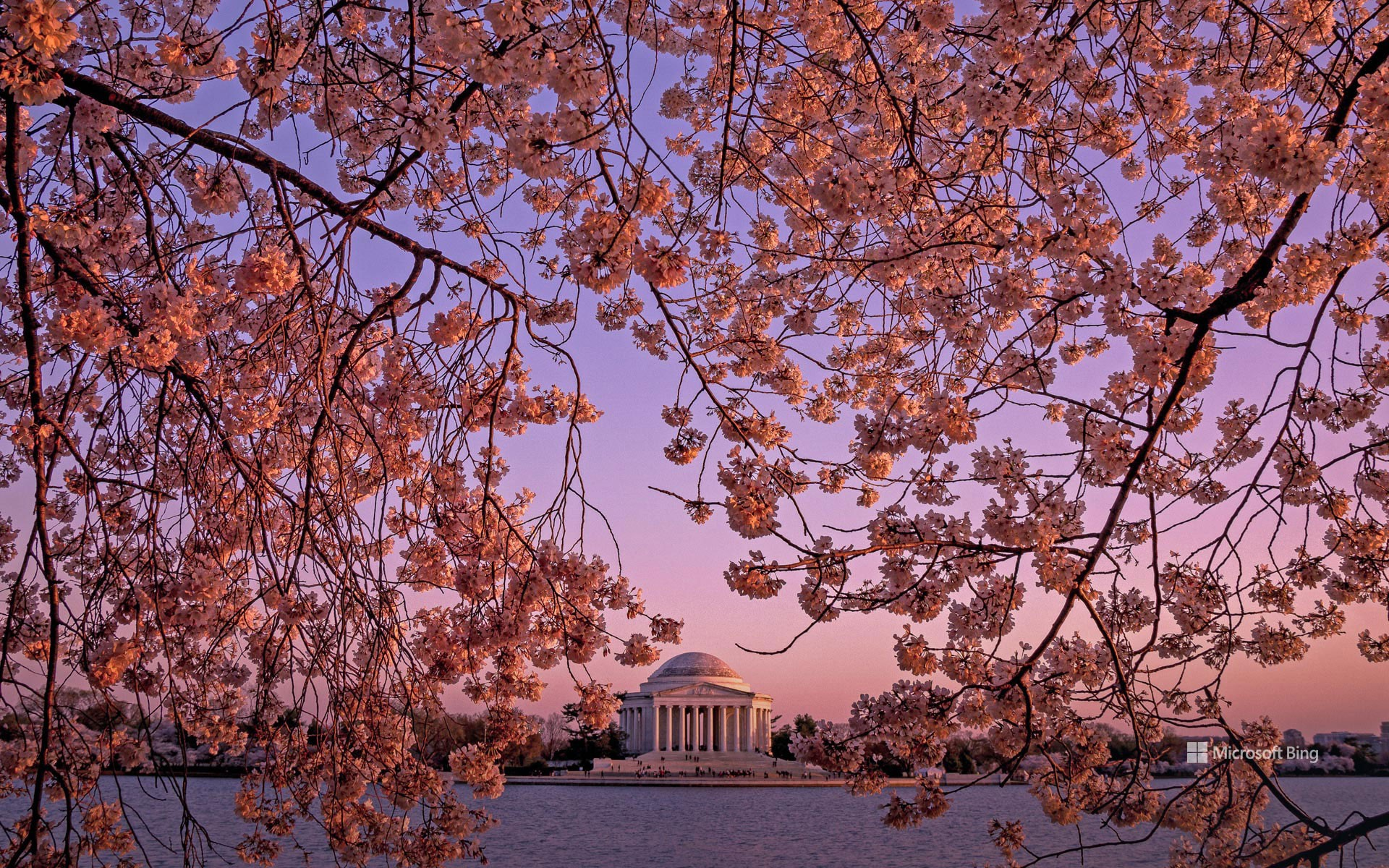 The Jefferson Memorial during the National Cherry Blossom Festival in Washington, DC