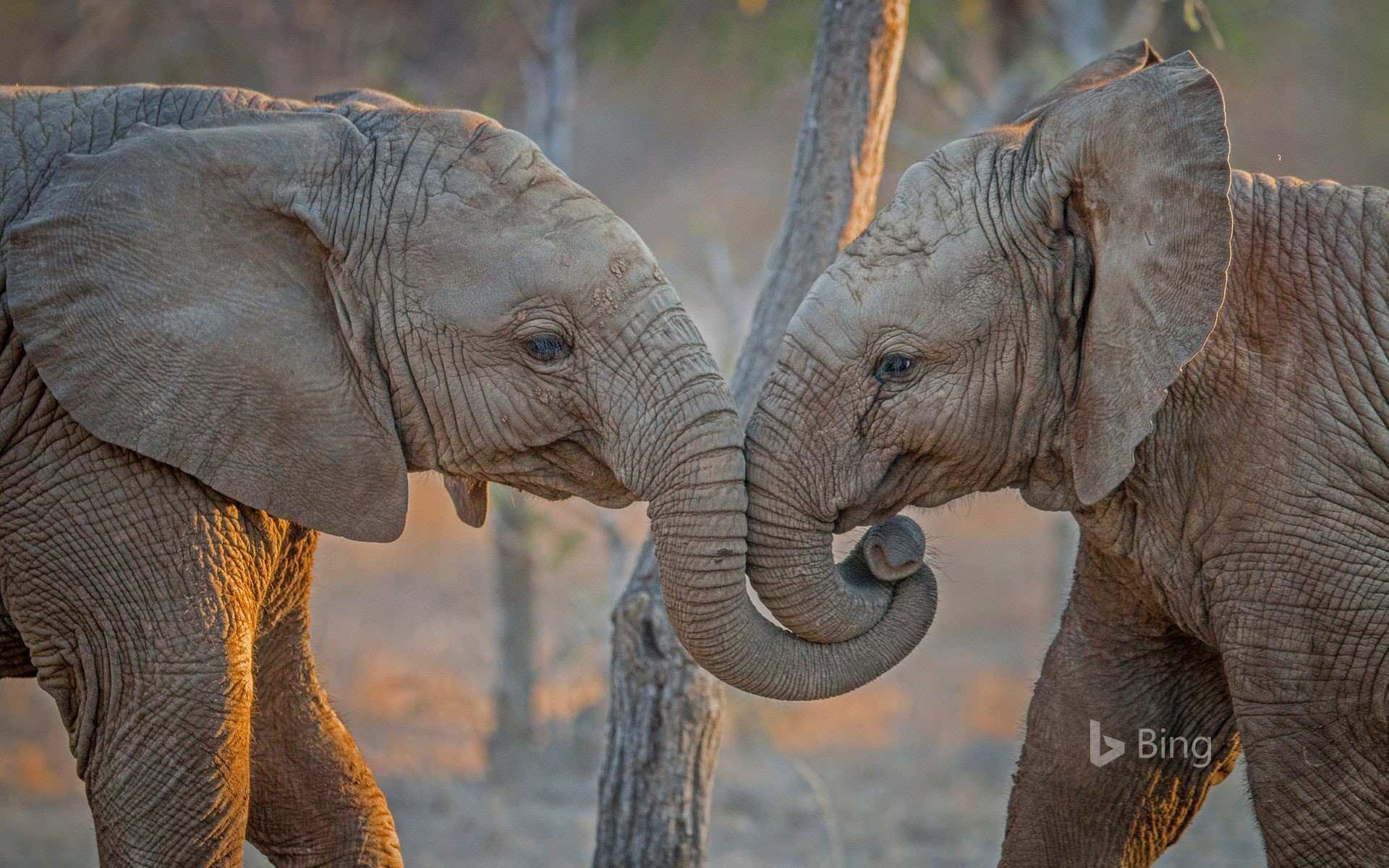 Elephants at Kapama Private Game Reserve in South Africa
