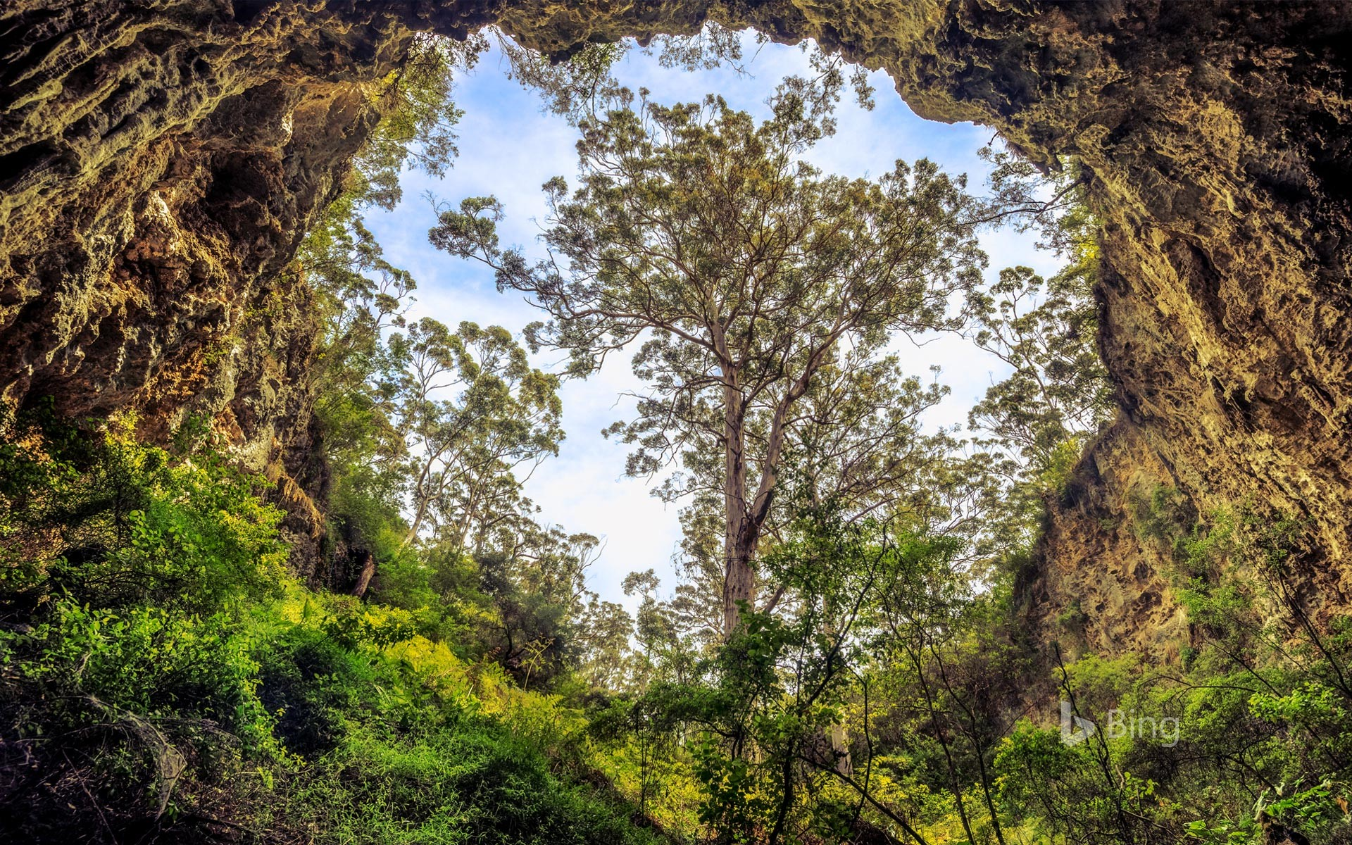 Giant karri tree at the entrance to a cave in the Margaret River area, Western Australia