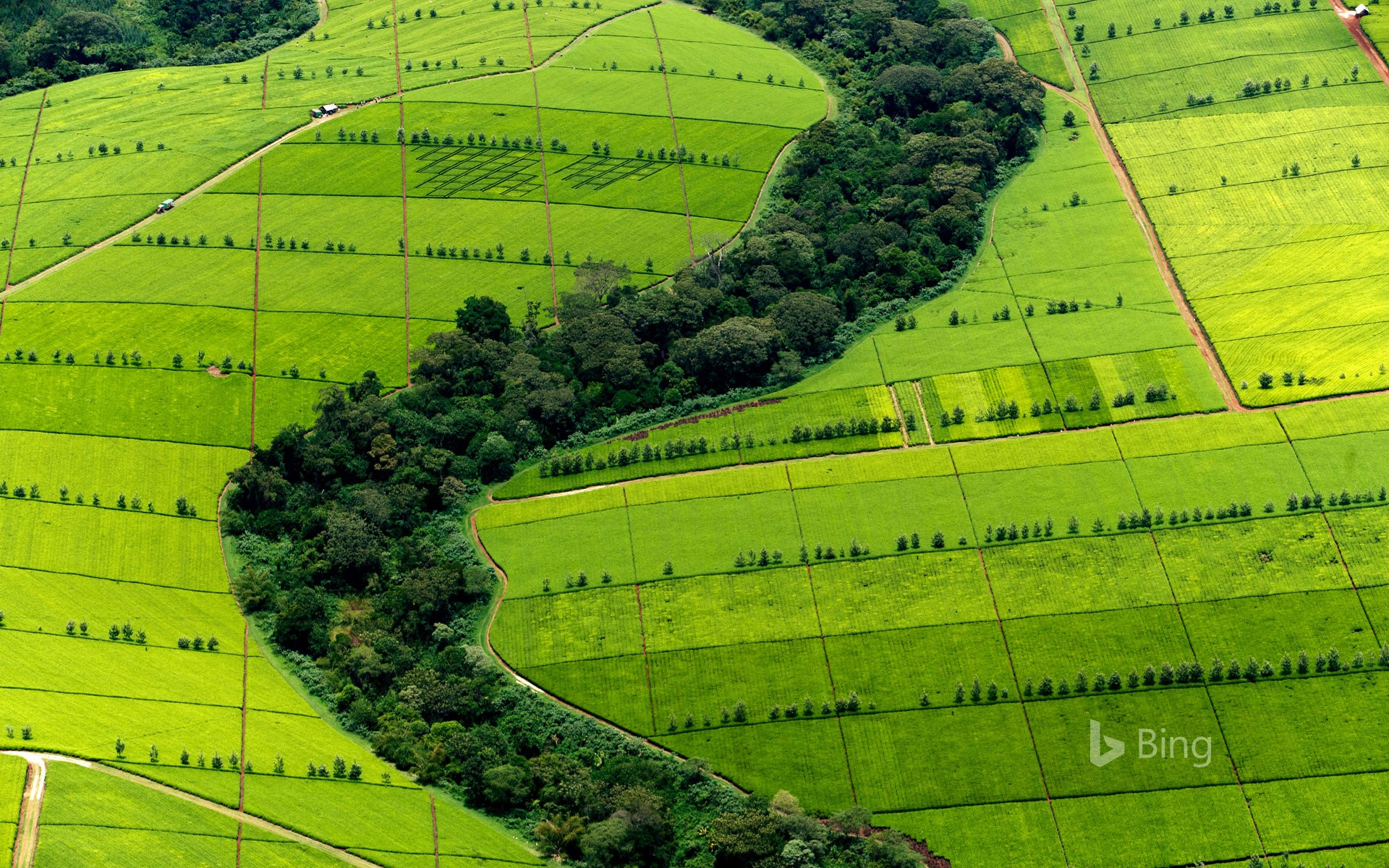 Tea plantation in Kericho County, Kenya