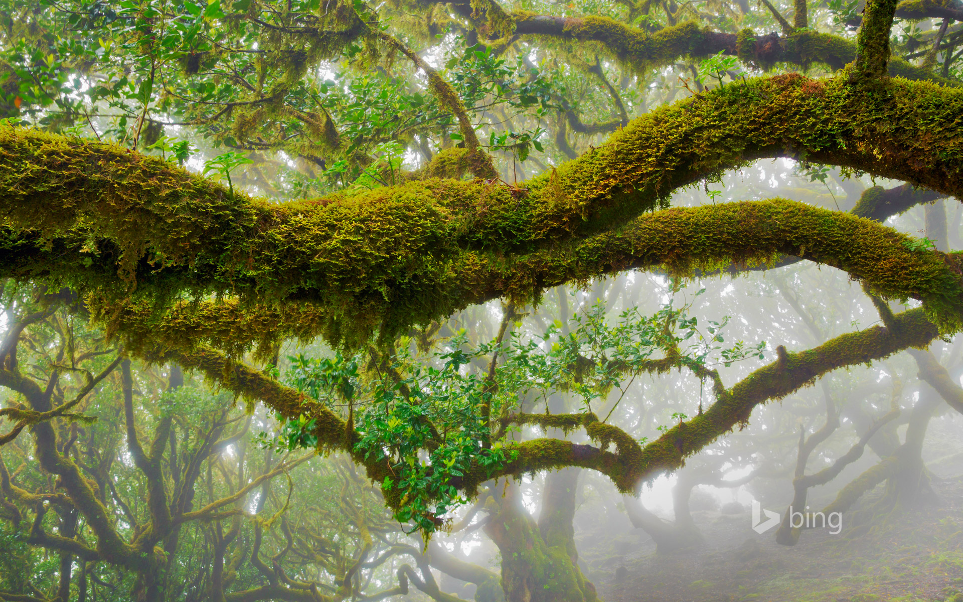 The laurel trees of Madeira Natural Park, Portugal