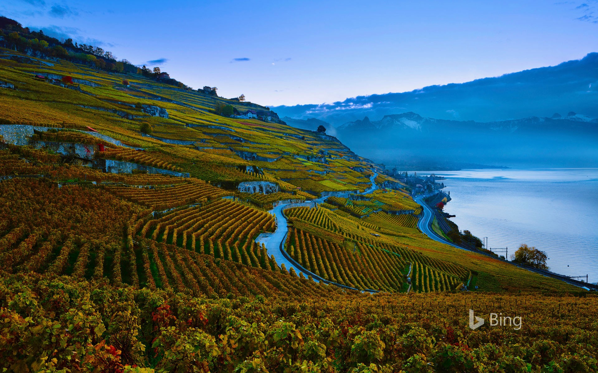 Terraced vineyards of the Lavaux region on the shores of Lake Geneva, Switzerland