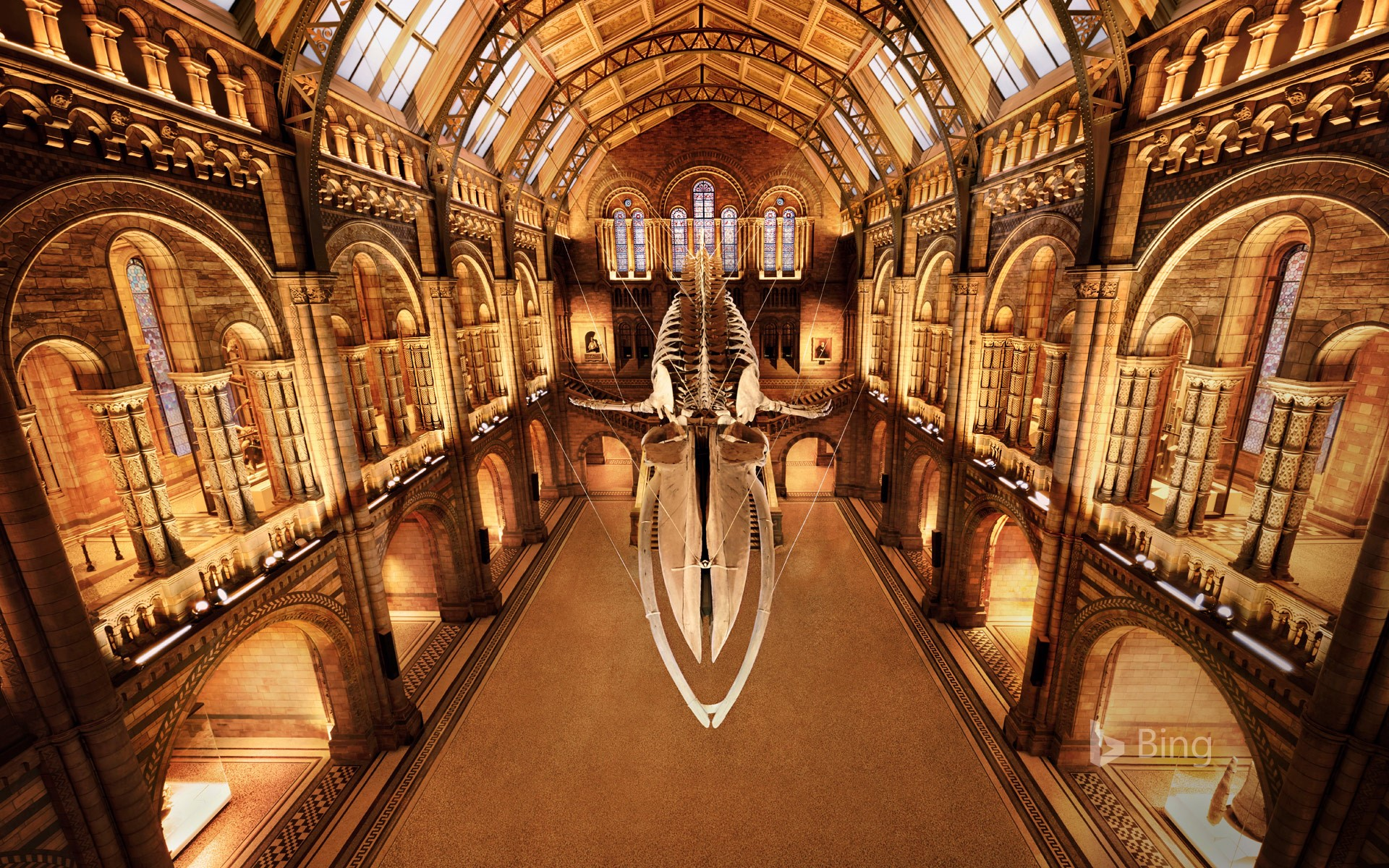 'Hope' the blue whale skeleton at the Natural History Museum, London