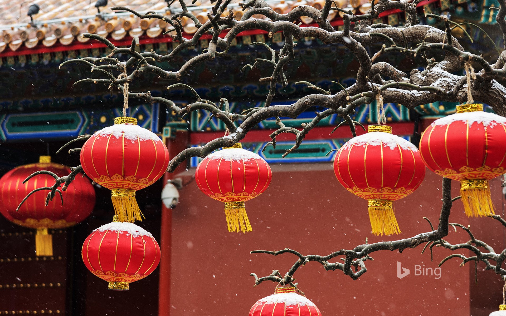 Red lanterns hanging on branches
