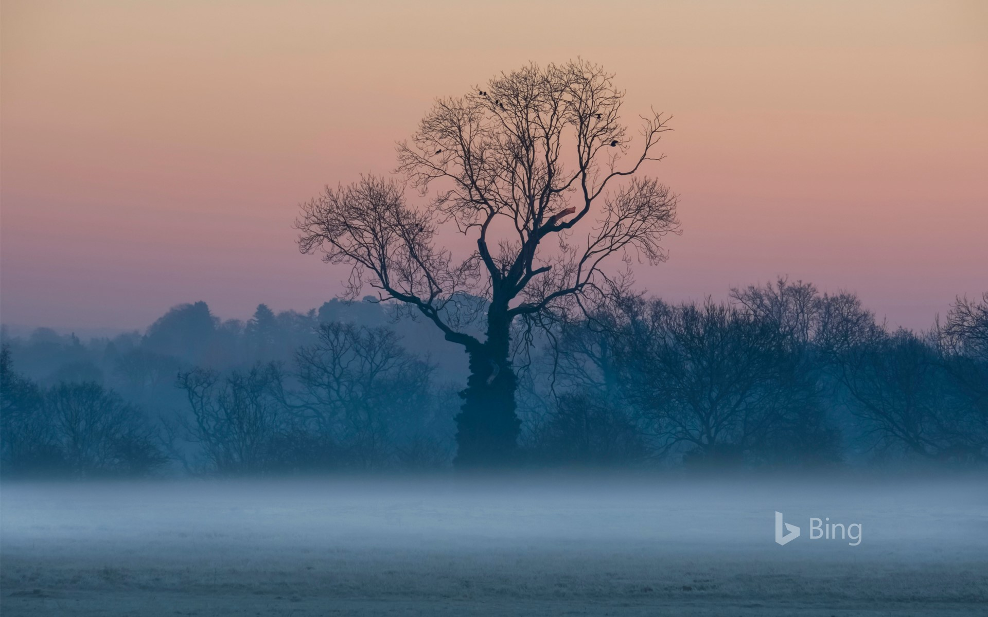 Leafless trees in the mist at sunrise, Surrey