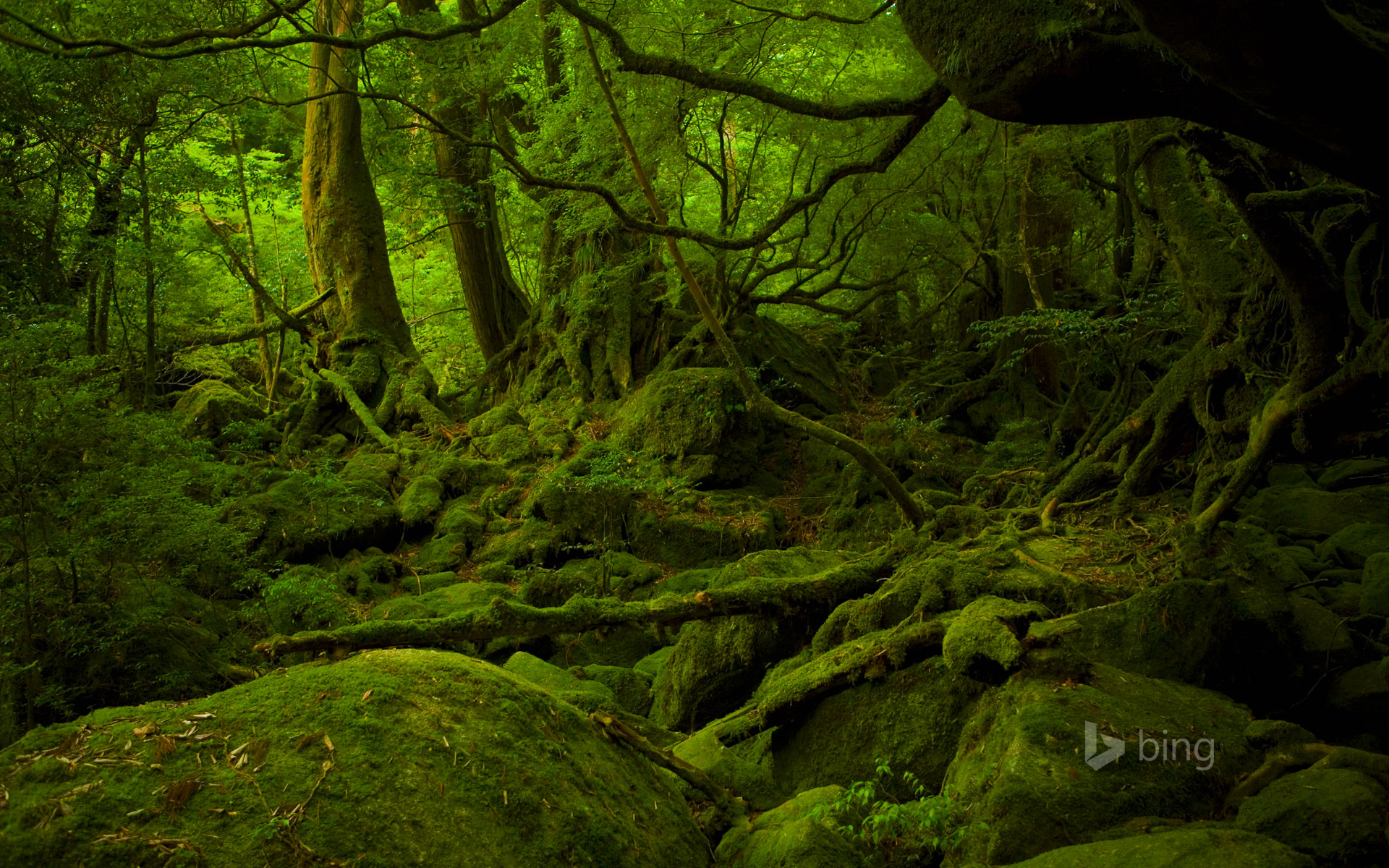 Mononoke Hime no Mori on Yakushima, Japan