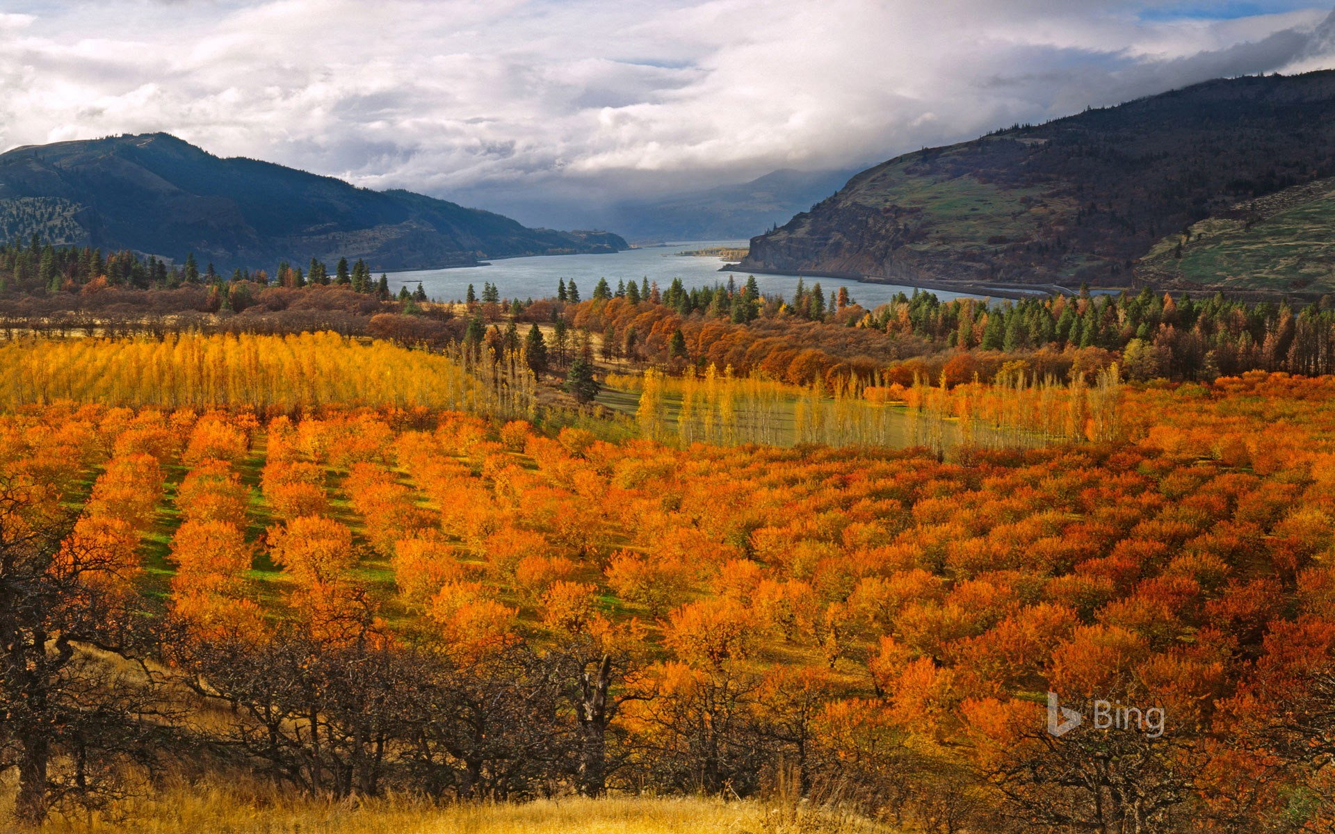 Cherry orchards in the Columbia River Gorge National Scenic Area, Oregon