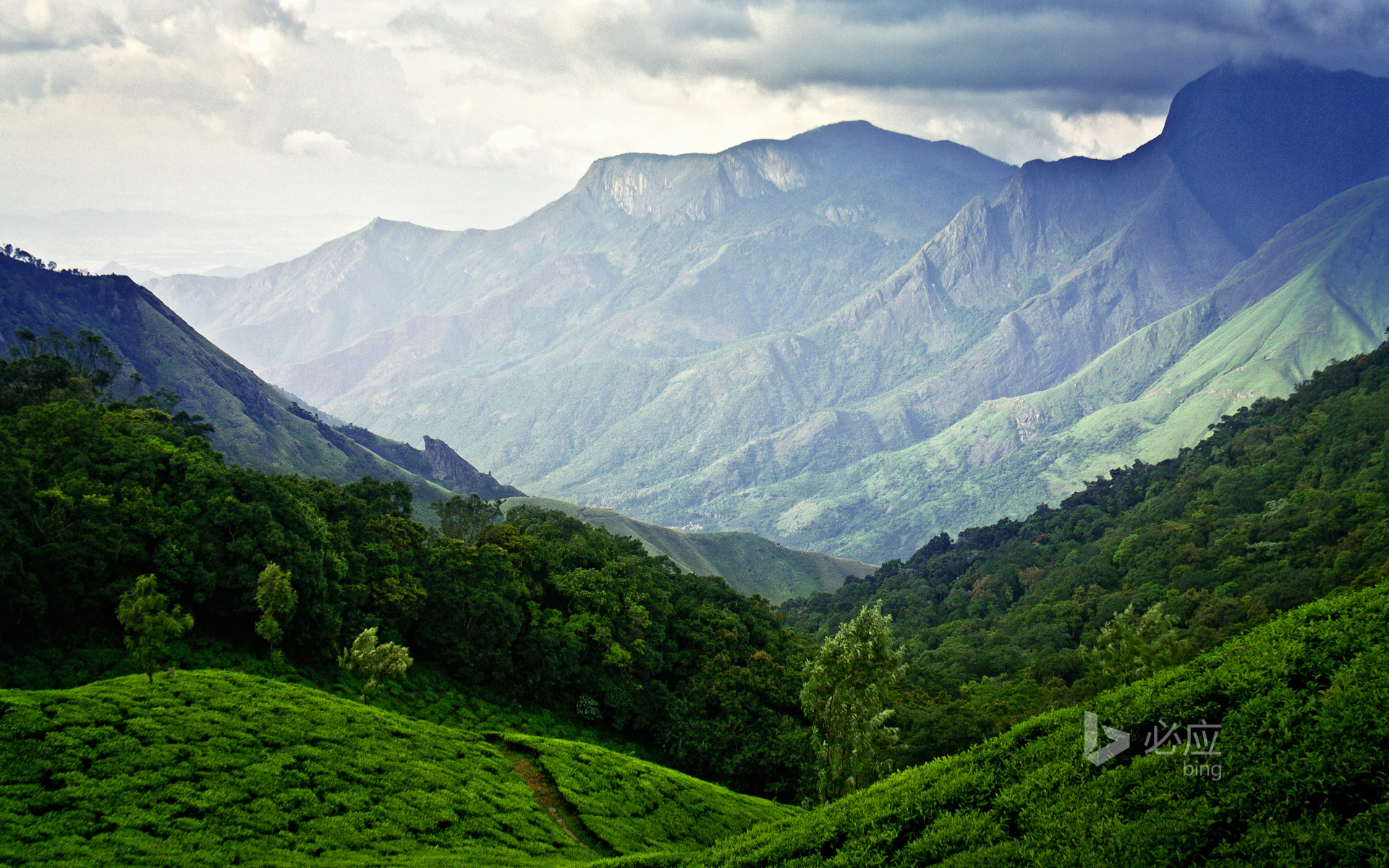 Munnar Tea Plantation in Kerala, India