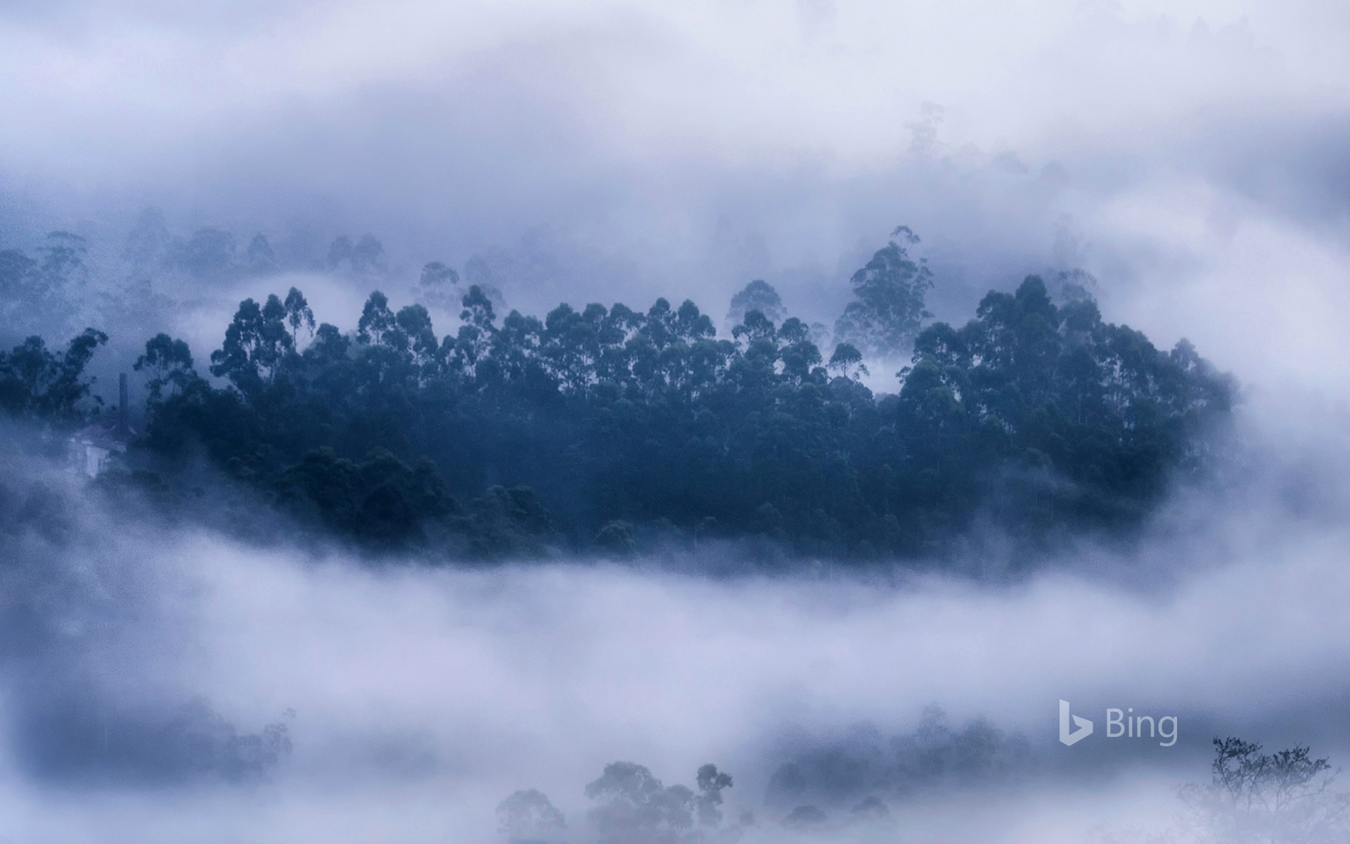 Mist surrounding a forest in Munnar, Kerala, India