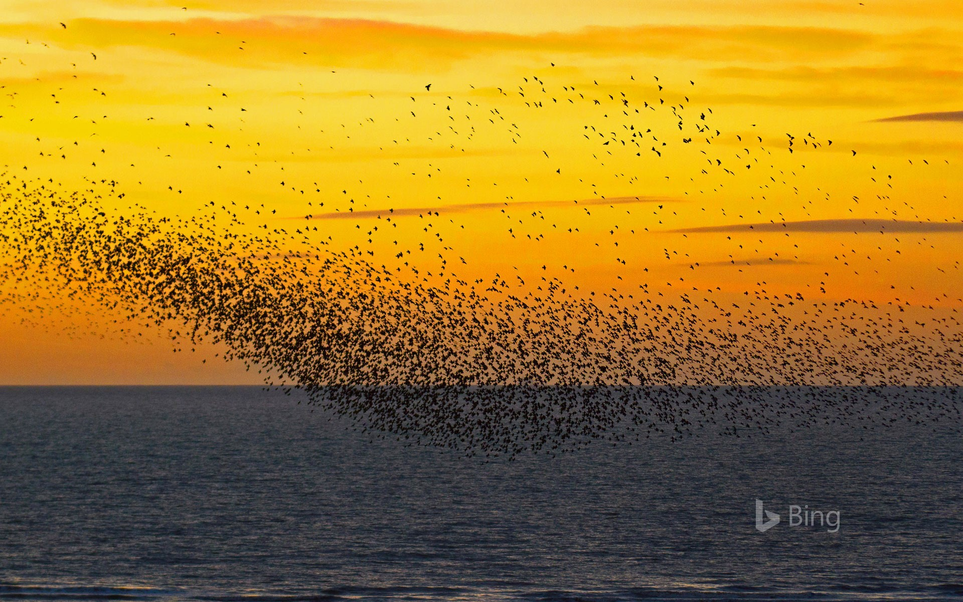 Starlings at sunset in Blackpool, England