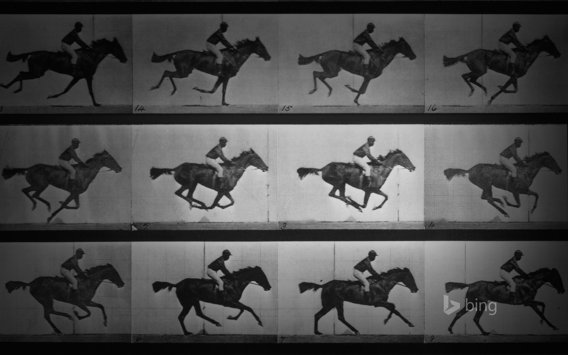 Eadweard Muybridge's photo series 'Sallie Gardner at a Gallop'