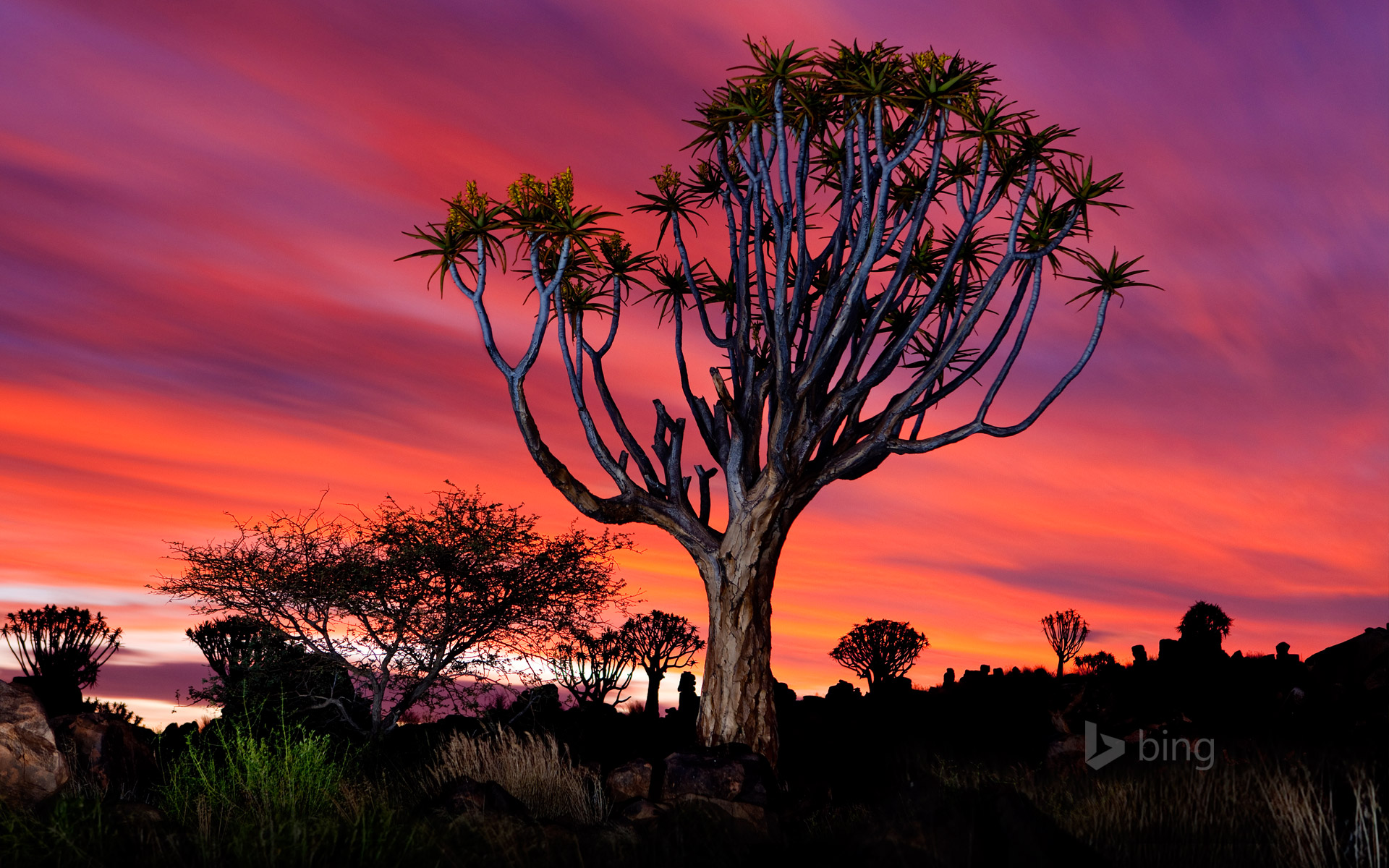 The Quiver Tree Forest near Keetmanshoop, Namibia