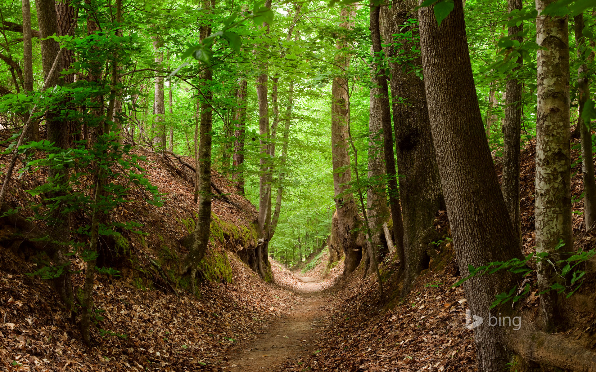 Natchez Trace National Scenic Trail, Mississippi