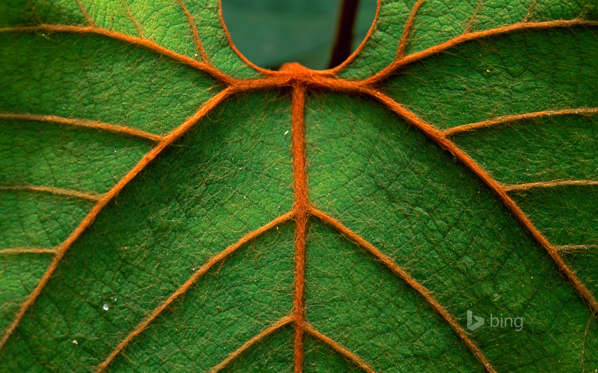 Detail of a leaf in Niah National Park in Sarawak, Borneo, Malaysia